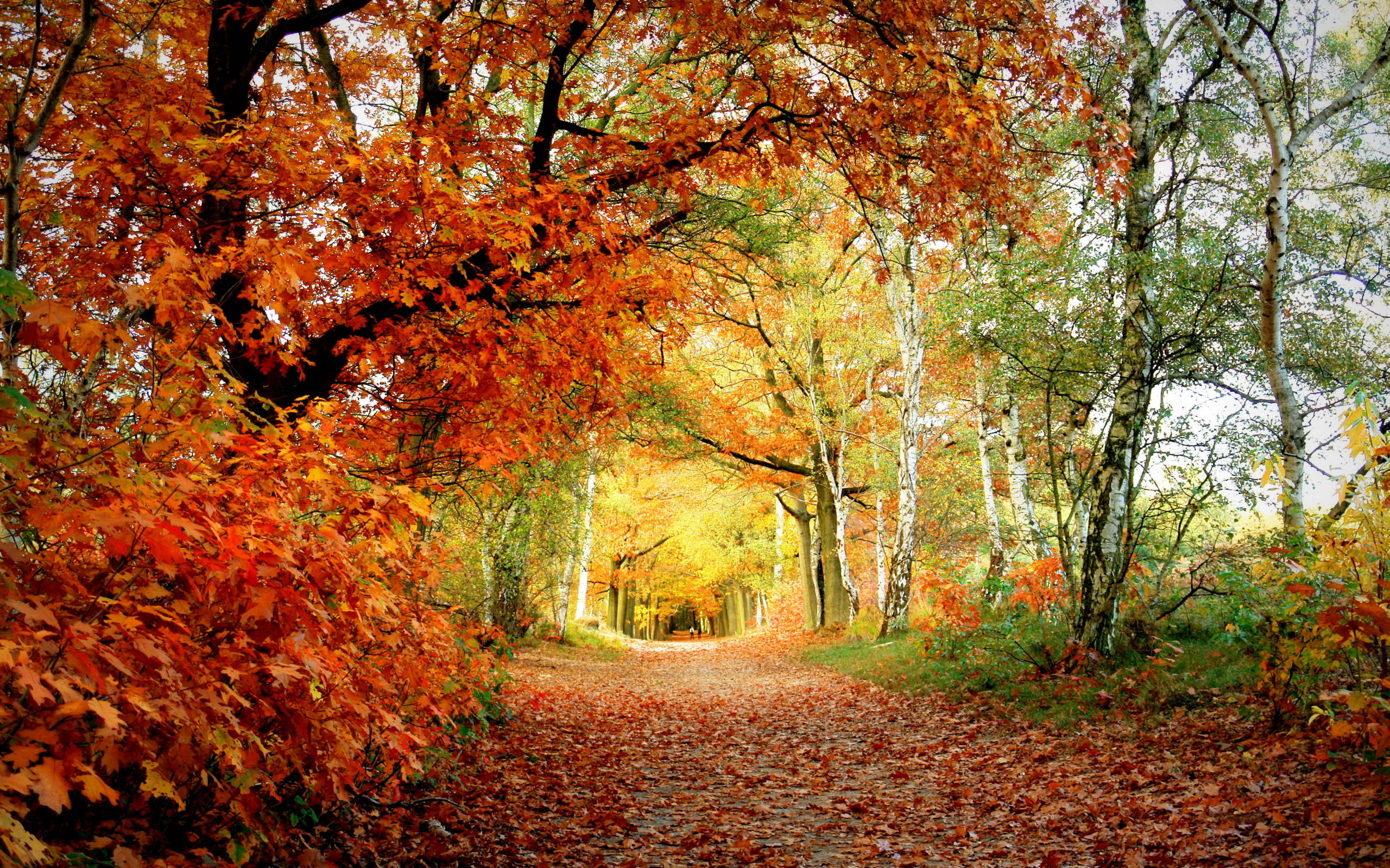 обои широкоформатные на рабочий стол бесплатно красивая природа осень № 241138 без смс