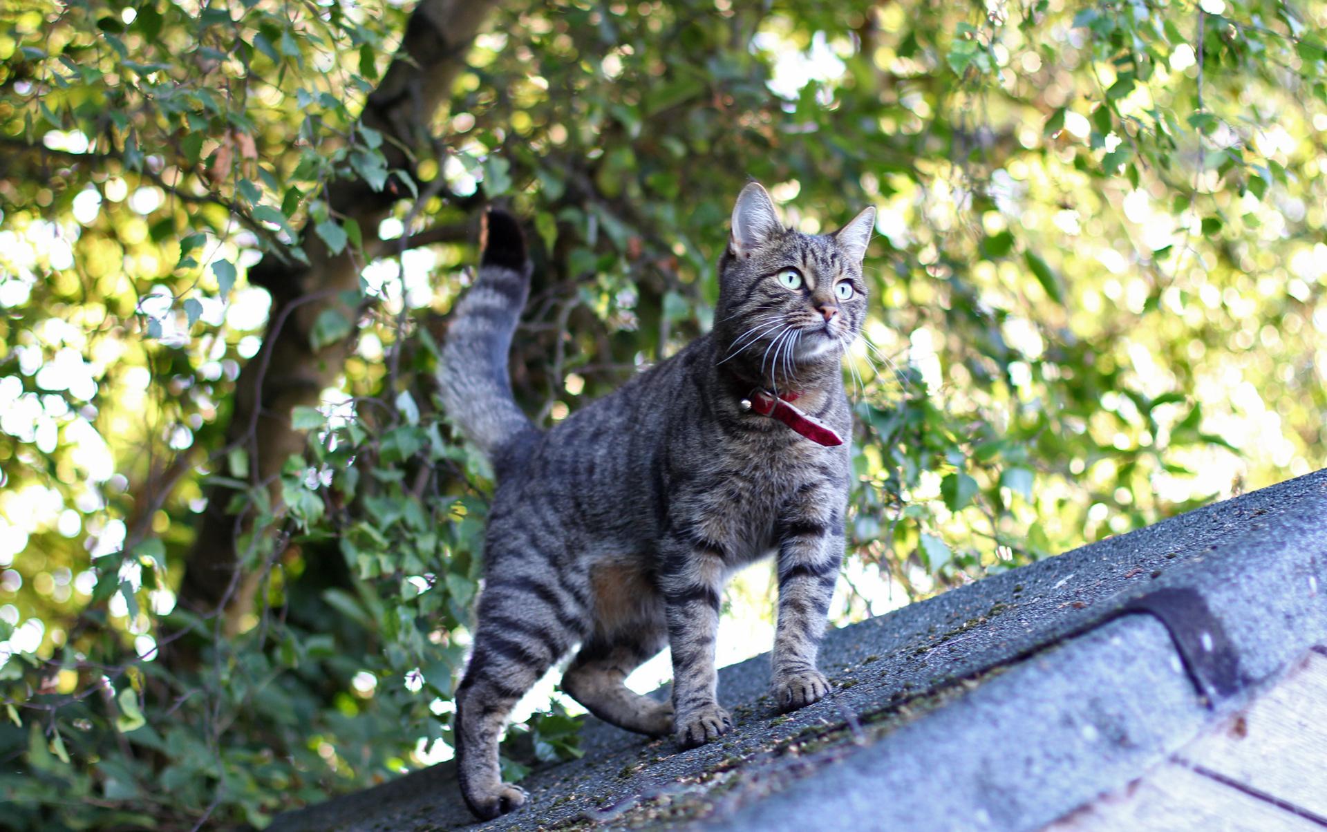живые обои на рабочий стол кошка ходит по монитору № 177769 загрузить