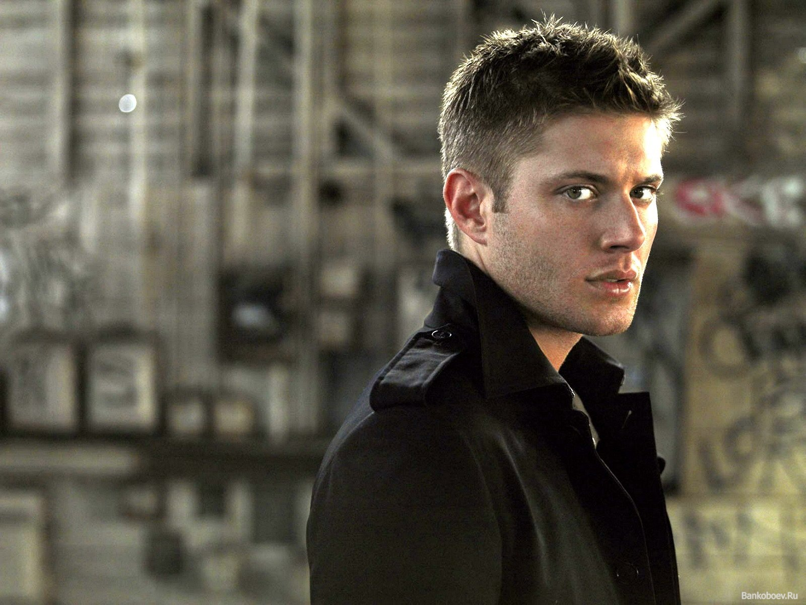 Jensen ackles дин винчестер загрузить
