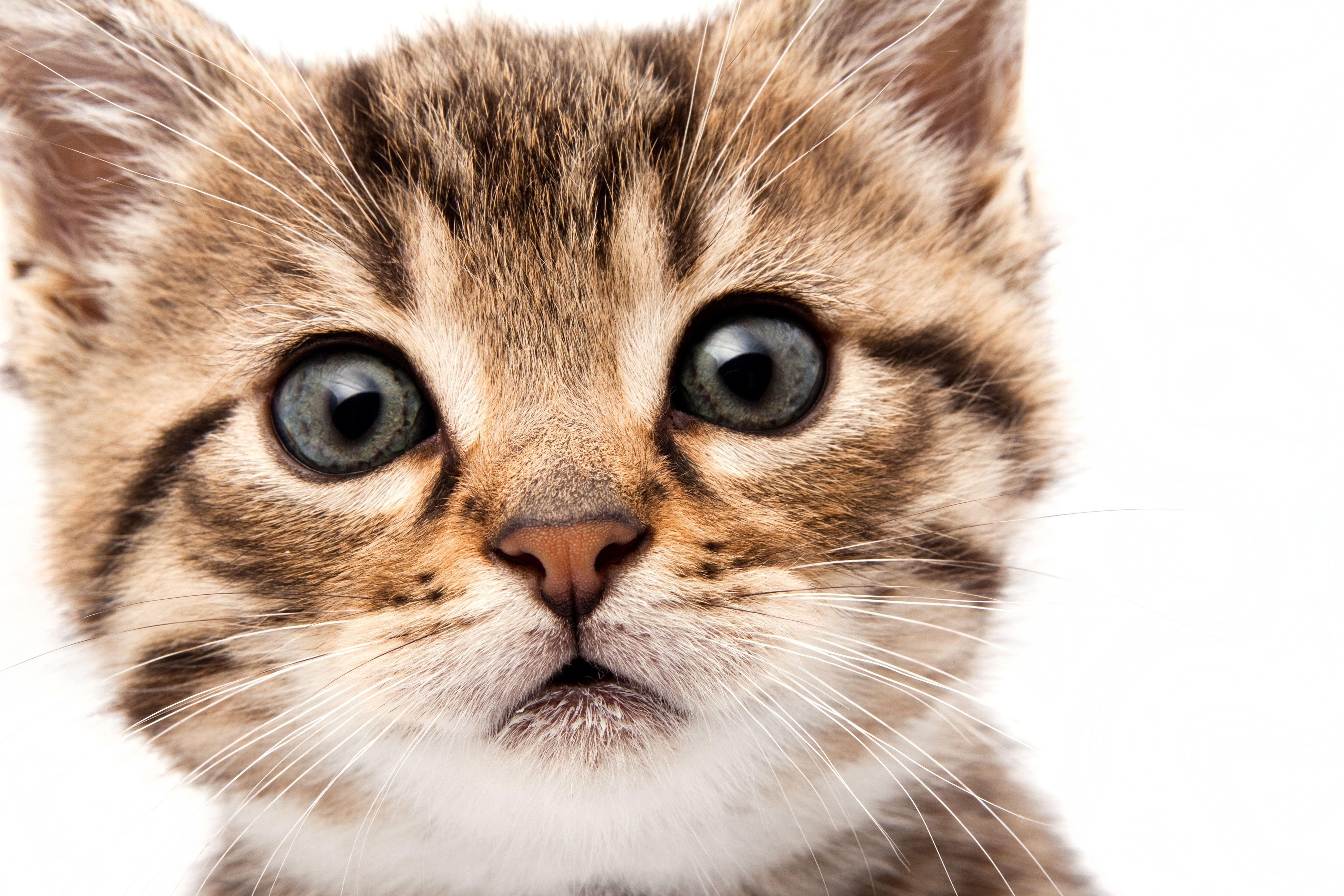 кошка язык глаза сердечки  № 2824824 без смс
