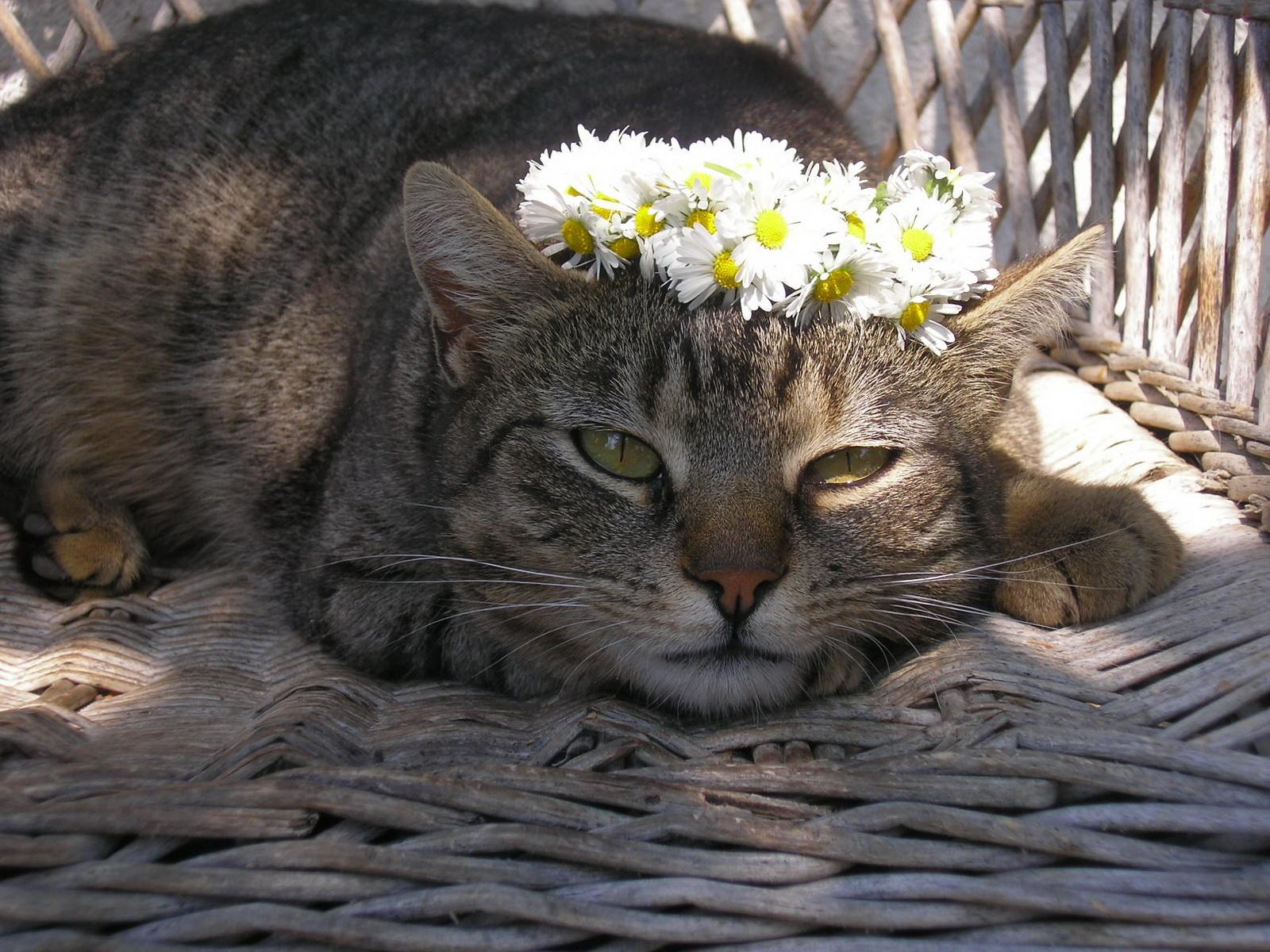 девушка котенок венок загрузить