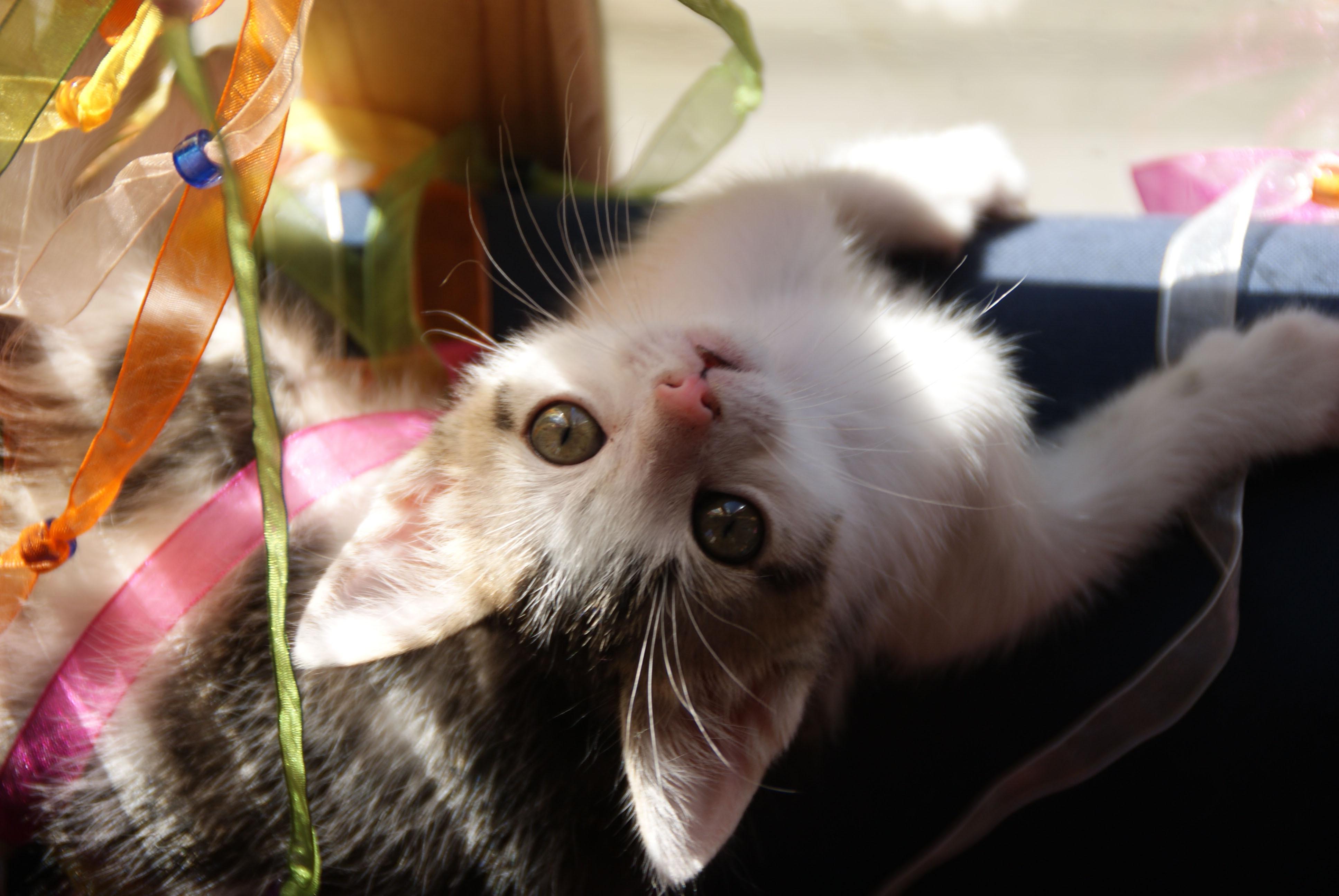 Котенок животное играется без смс