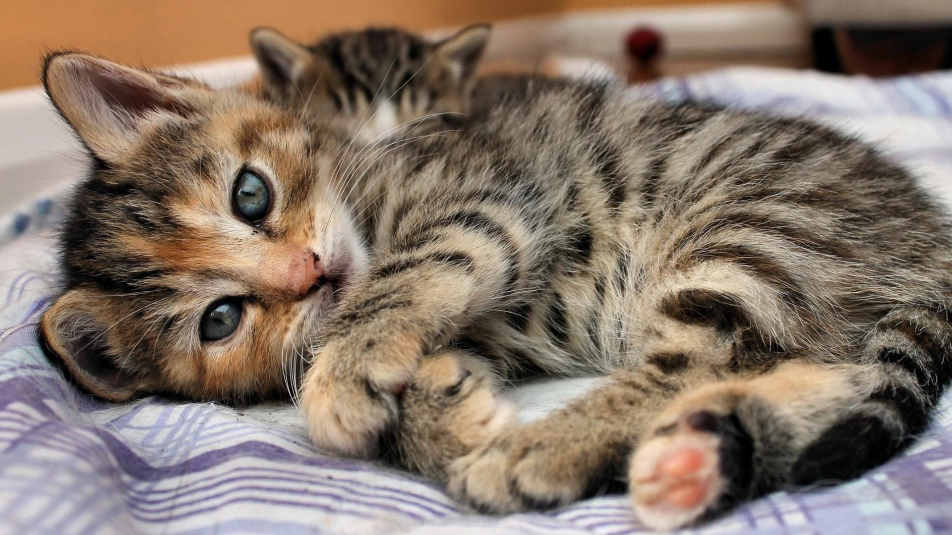 Котята животные подборки