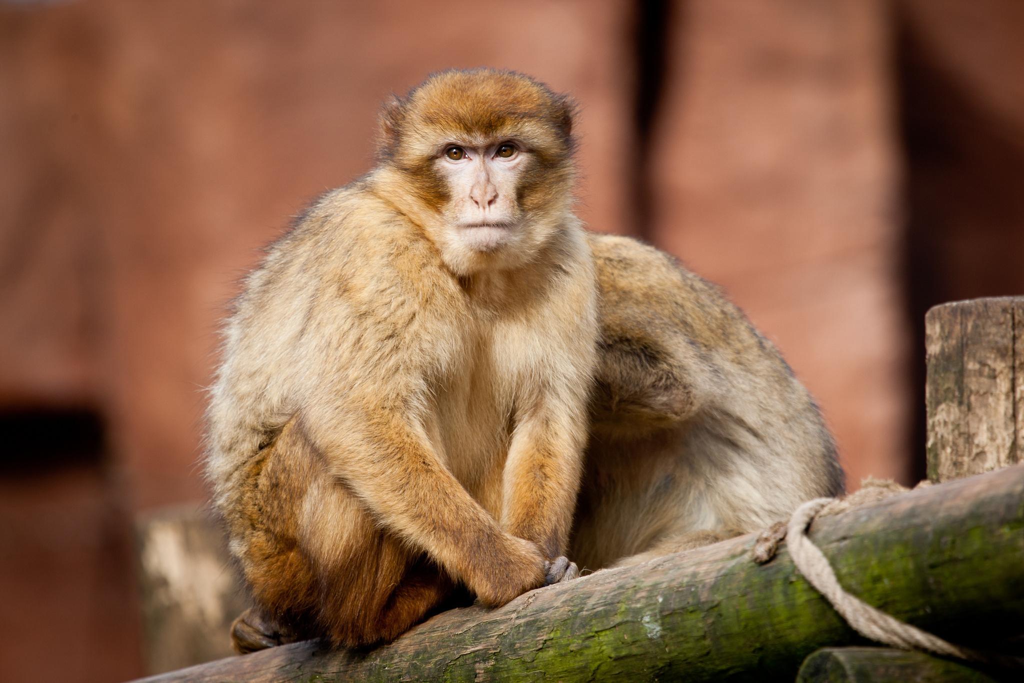 обезьянка ветка белая скачать
