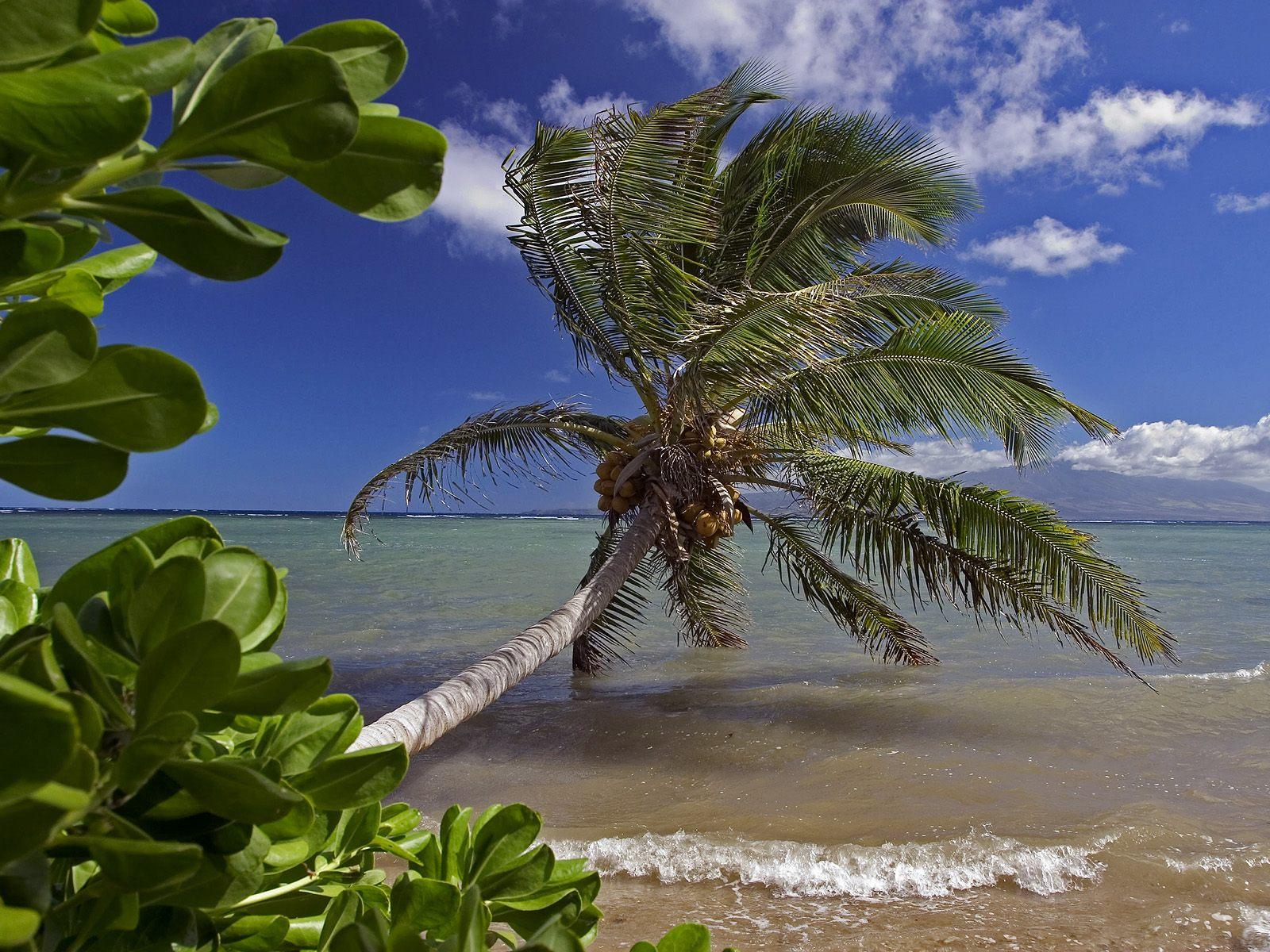 Molokai Shore, Hawaii бесплатно