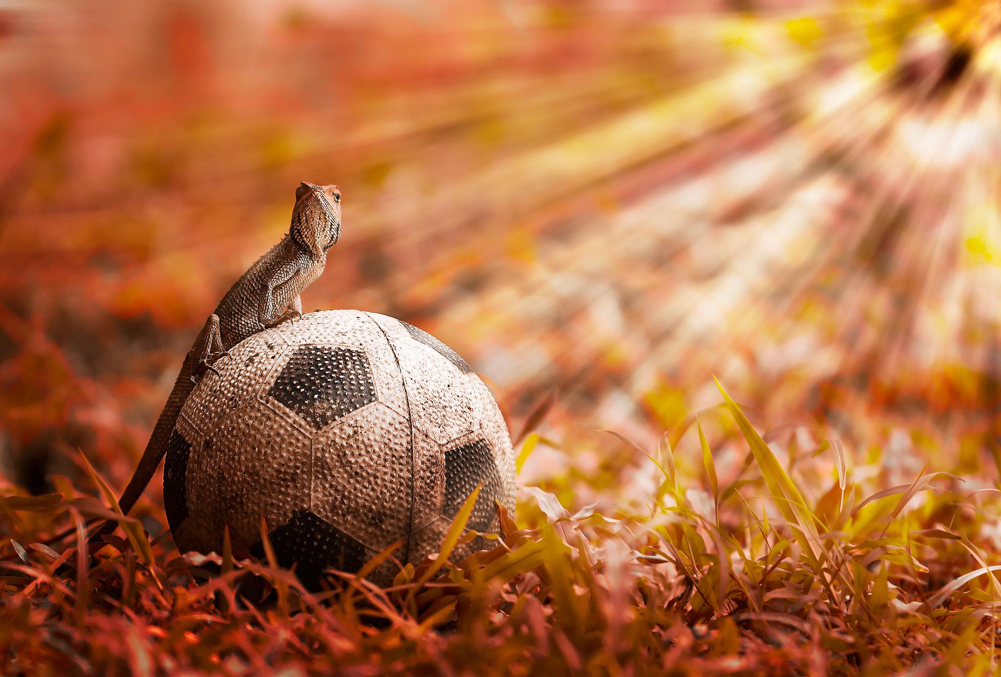 Звериный футбол  № 3148767 без смс