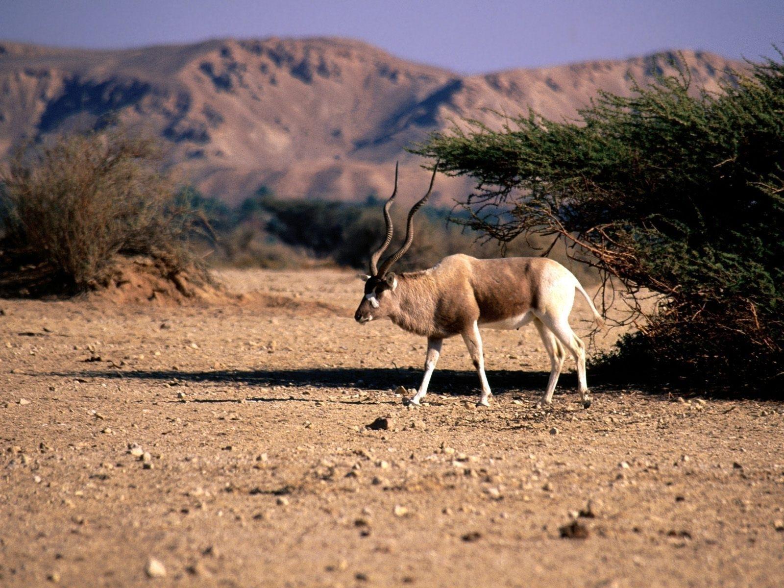 природа животные пустыня  № 3146297 без смс