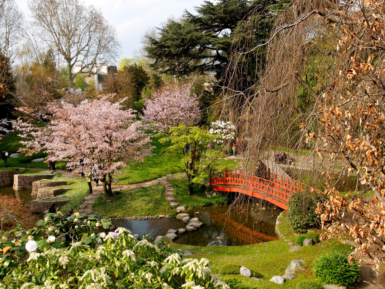 цветущие деревья во дворе  № 532042 бесплатно