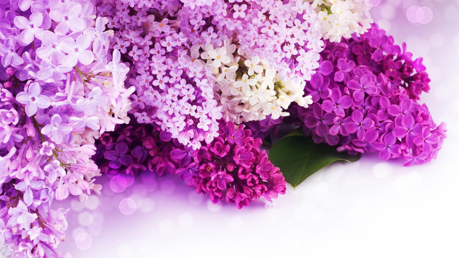 природа цветы сирень сахар блюдо  № 1154327  скачать