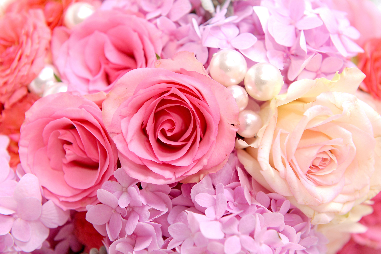 розовые розы обои на рабочий стол в высоком качестве № 130068 загрузить