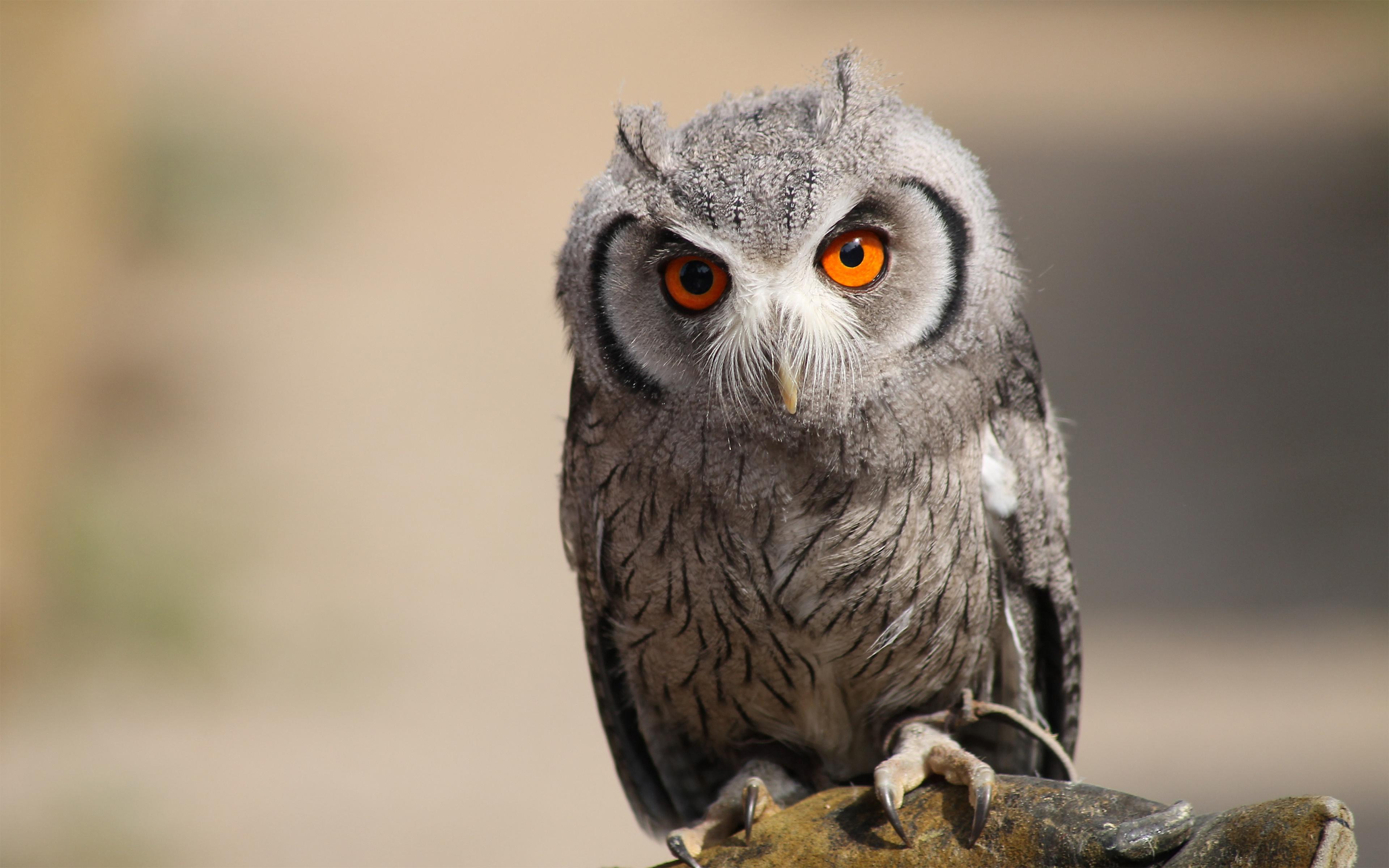 пестрая сова с желтыми глазами скачать