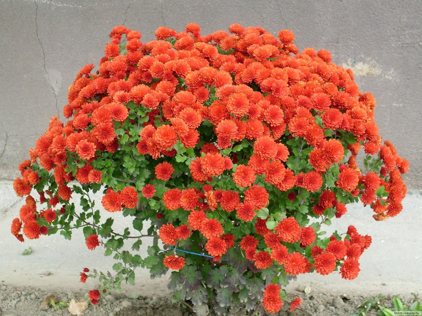 Весна картинки  mirpozitivaru