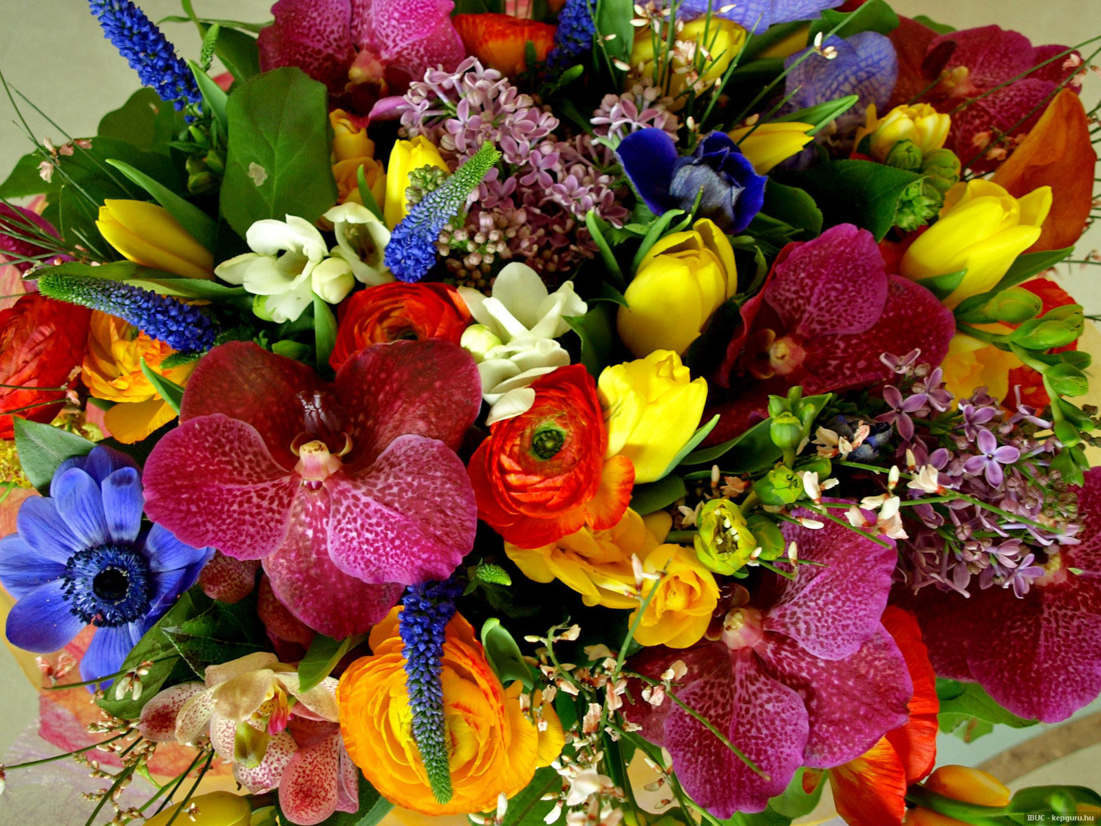 Поздравление с разными цветами 64