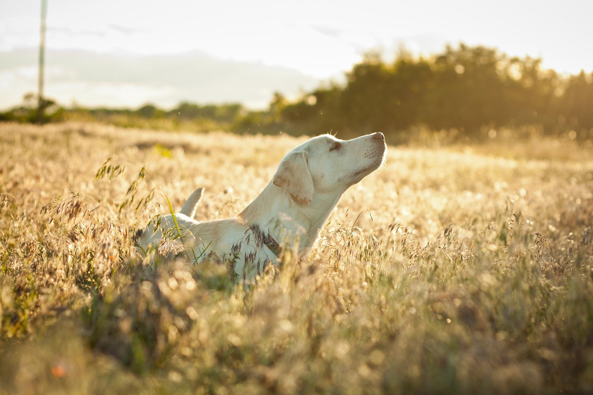 собака трава в поле скачать