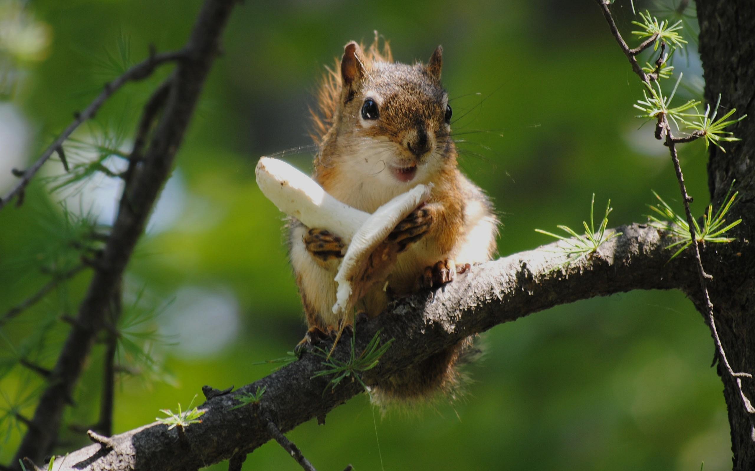 природа осень животное корзина семечки белка  № 2096122 бесплатно