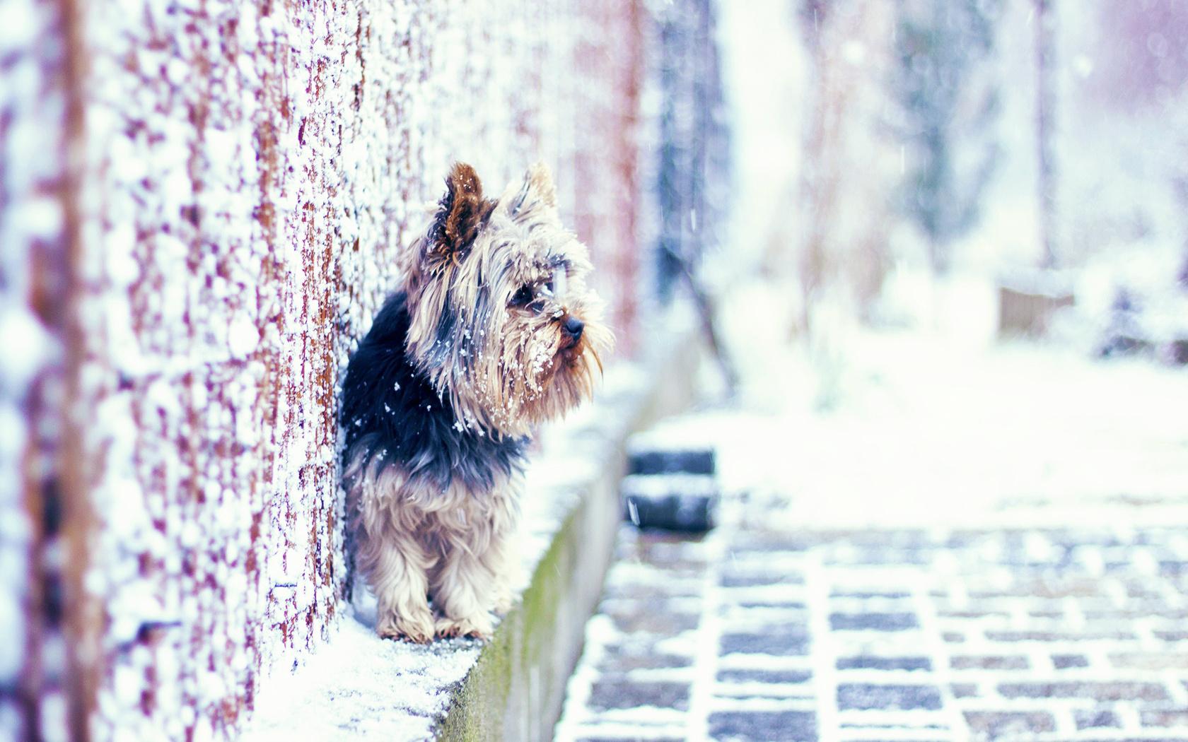Собака на улице бесплатно