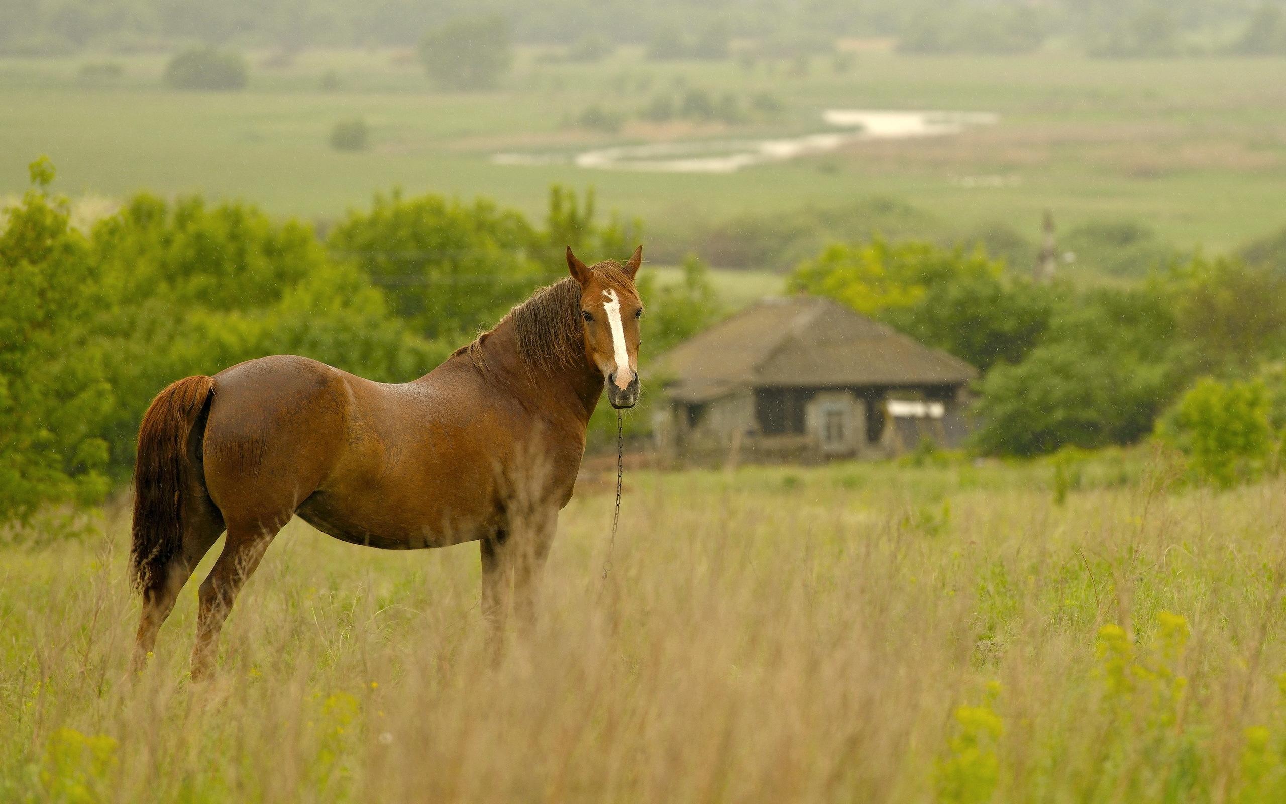 Лошади в поле  № 2021249 бесплатно