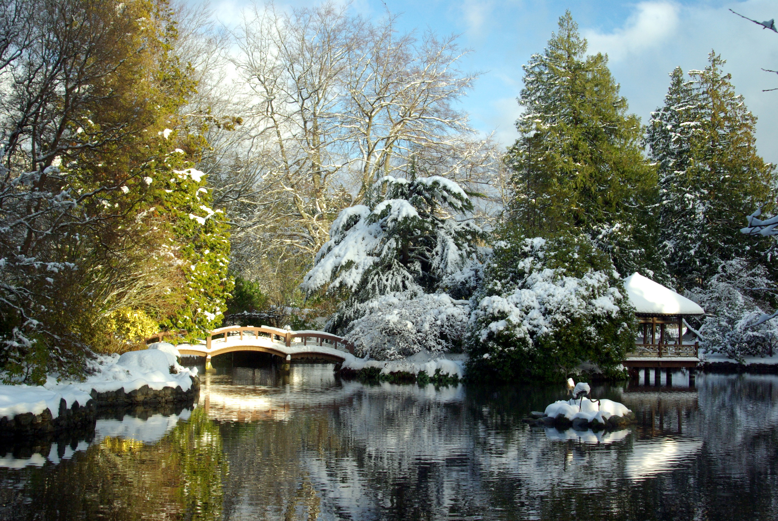 Зимний парк загрузить