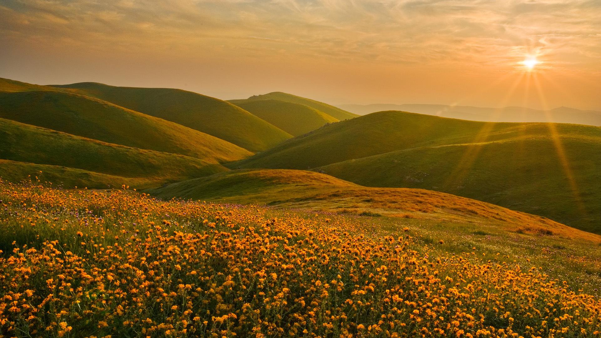 цветы поляна горы холм небо  № 3836158  скачать