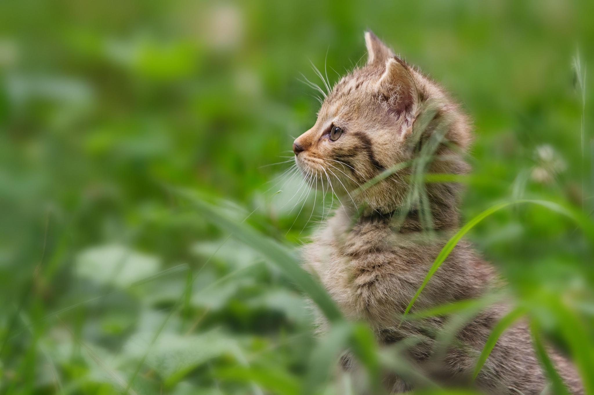 природа животные трава кот  № 1316928 без смс