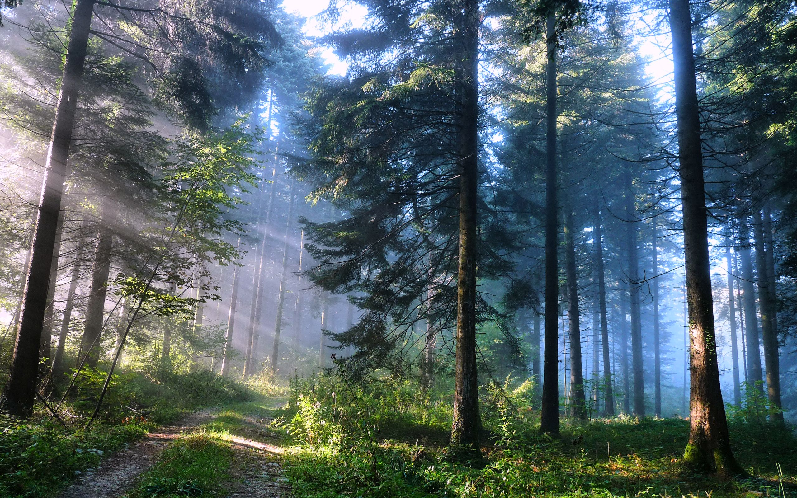 the awesome power on nature in works of literature
