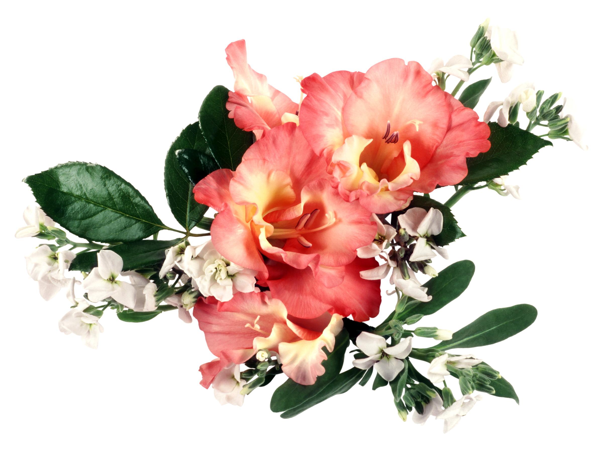 фото цветов гладиолусы: