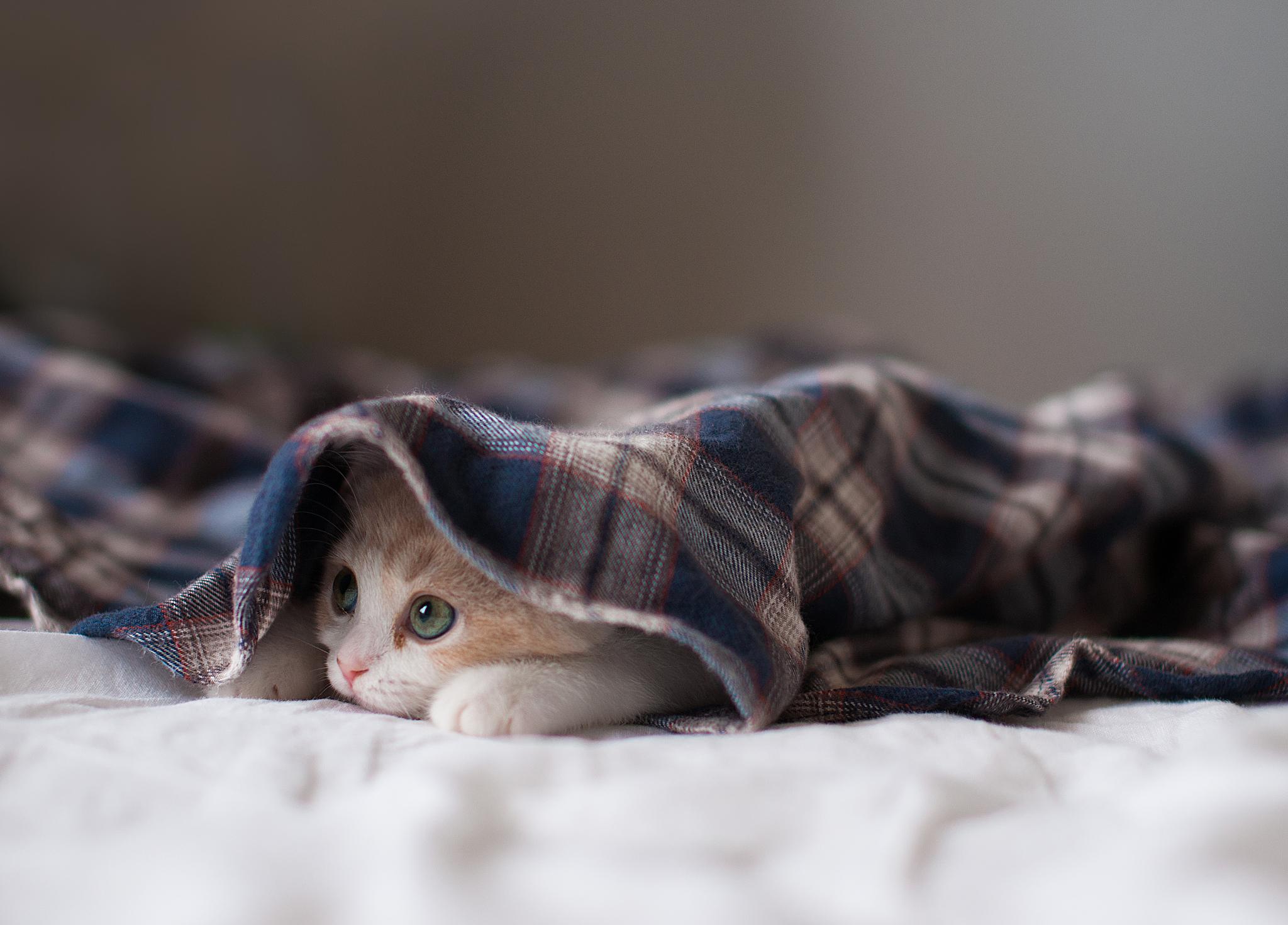 котенок в одеяле загрузить