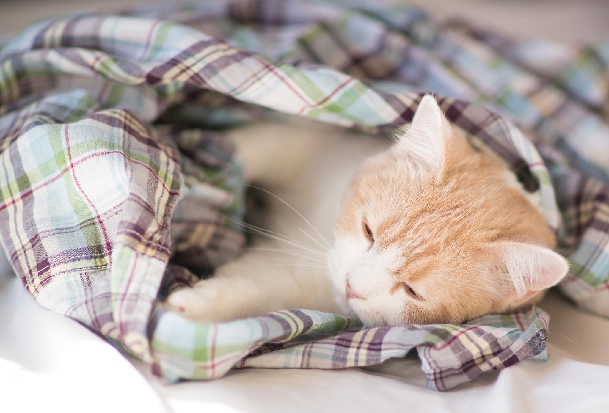 Милый сон без смс