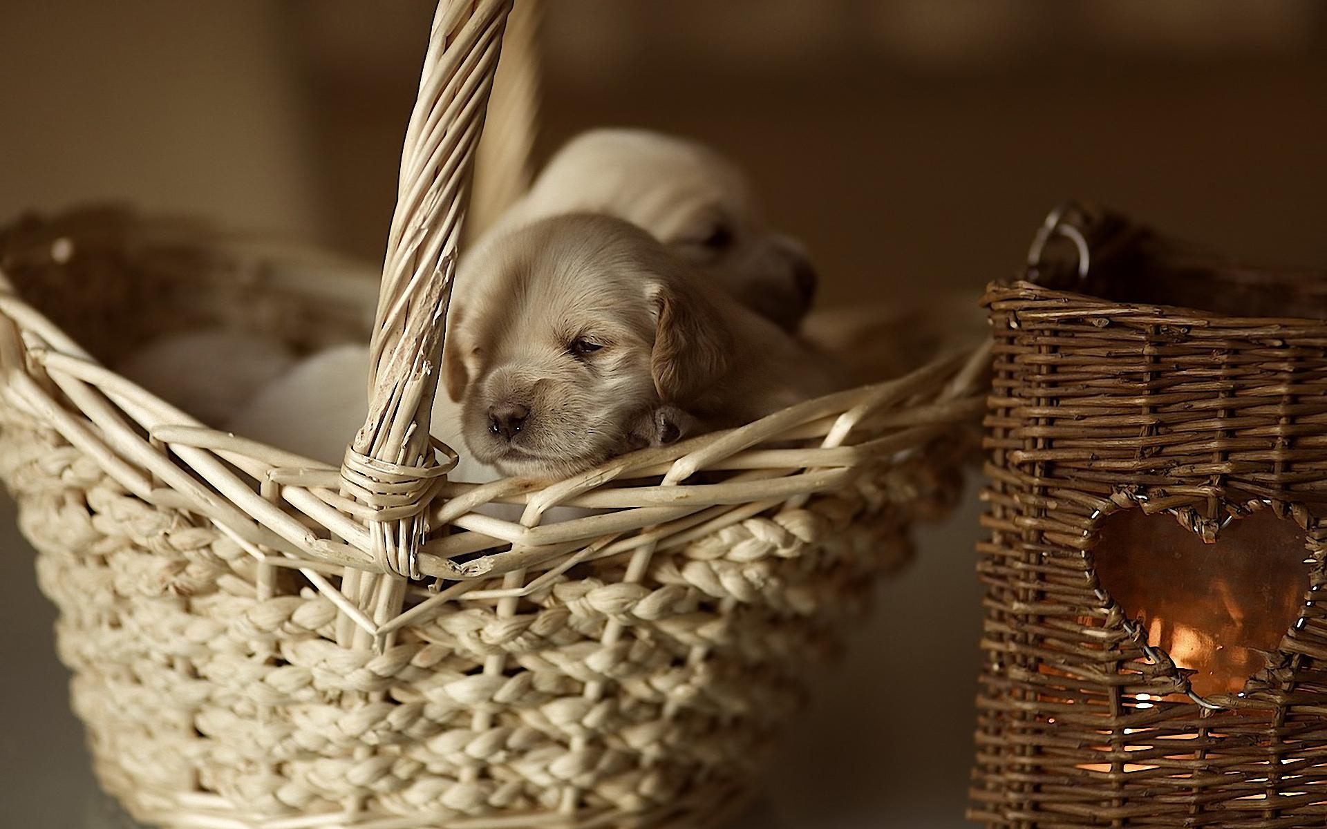 щенок корзина puppy basket без смс