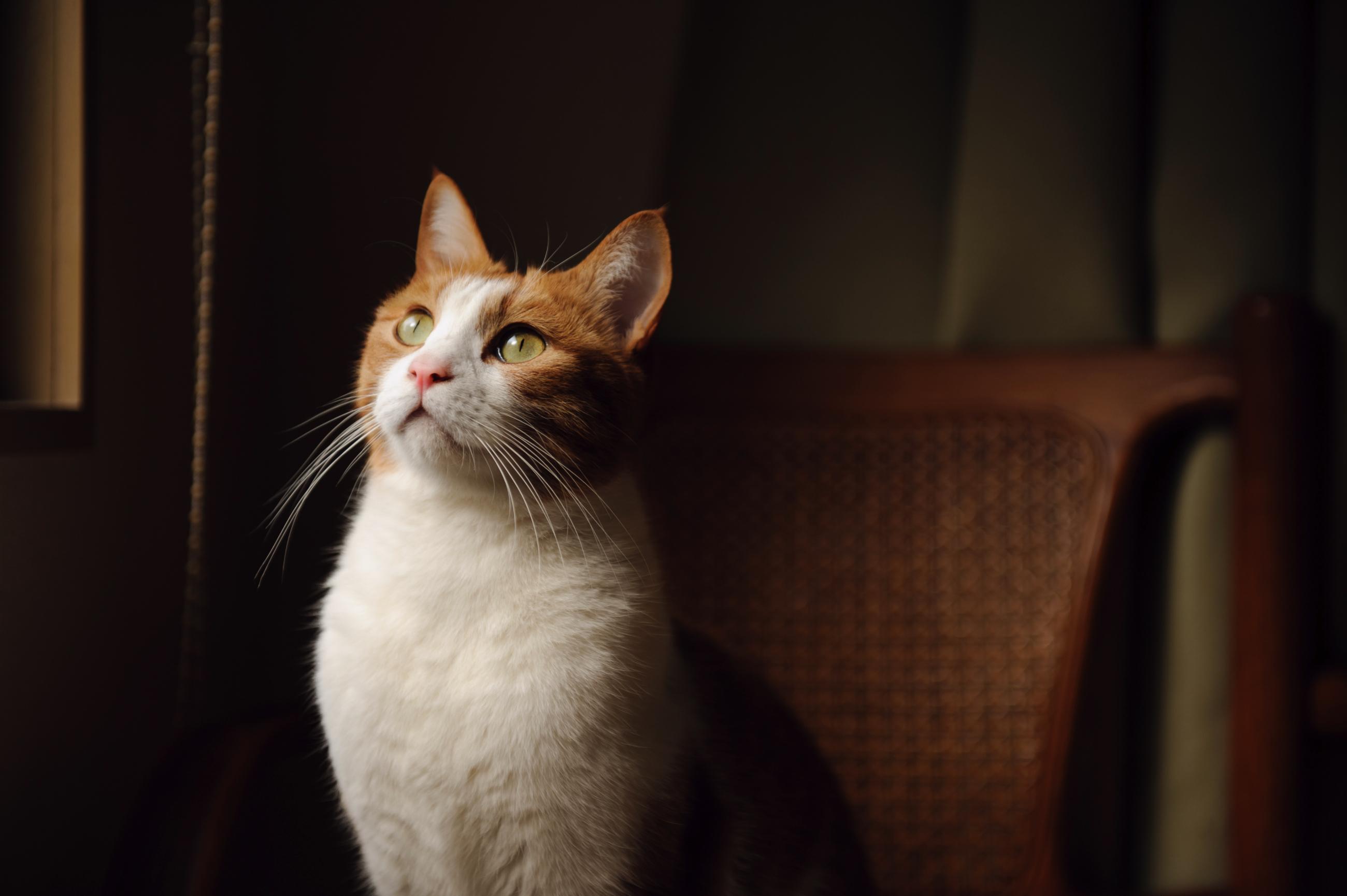 кошка зеленые глаза постель  № 3655525 без смс