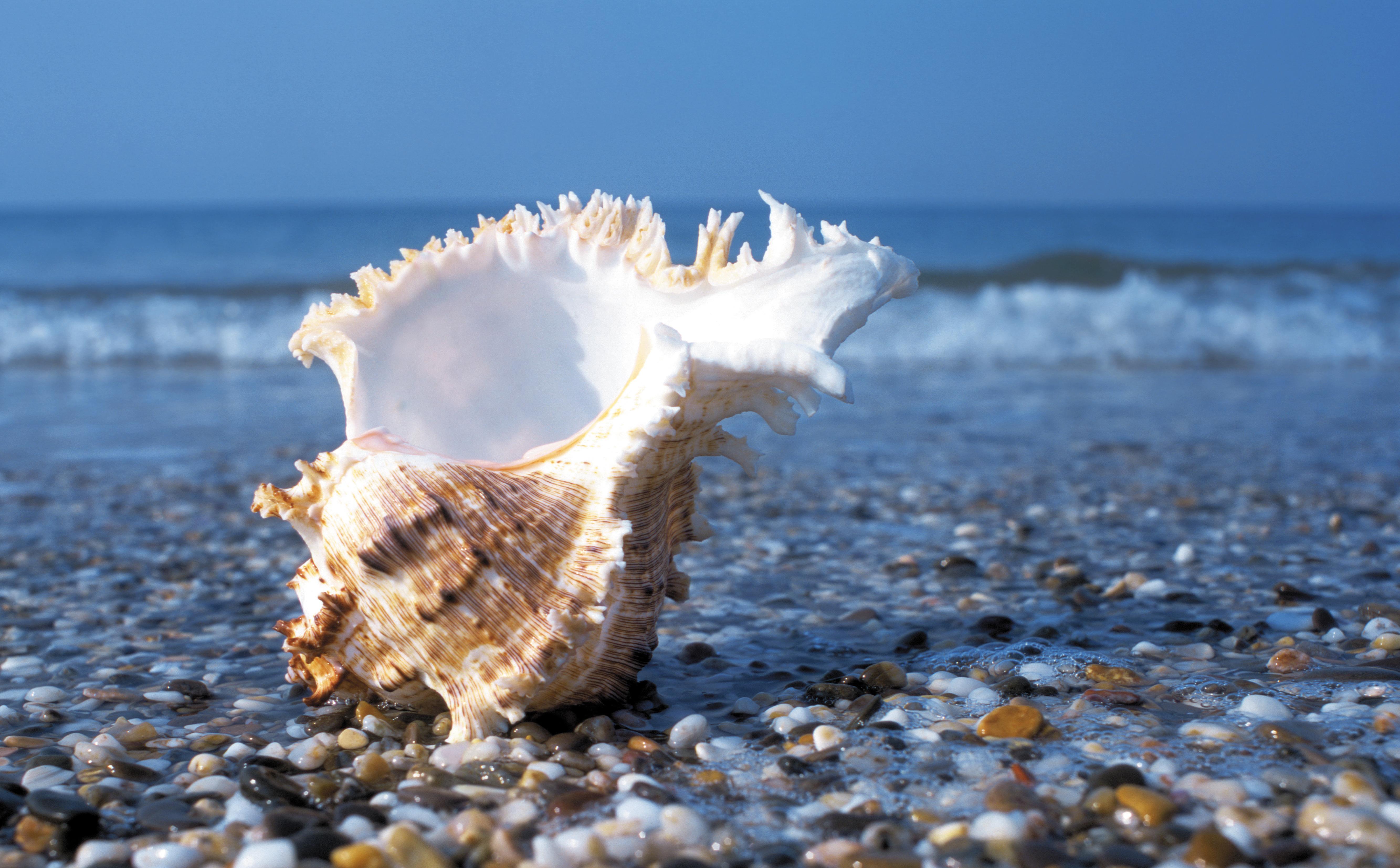 вода море природа  № 398864 без смс