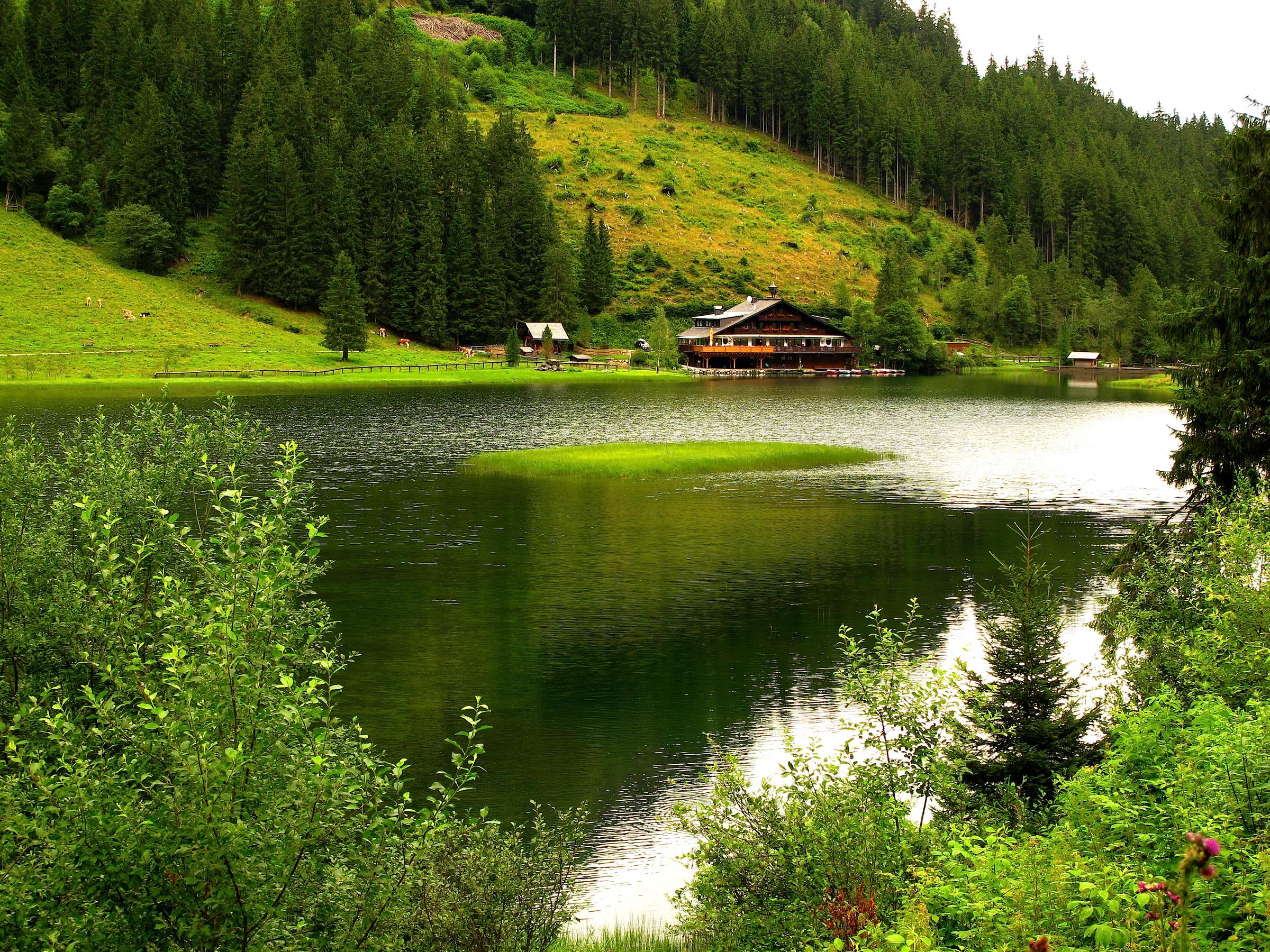 природа озеро дом лес деревья  № 2447981 загрузить