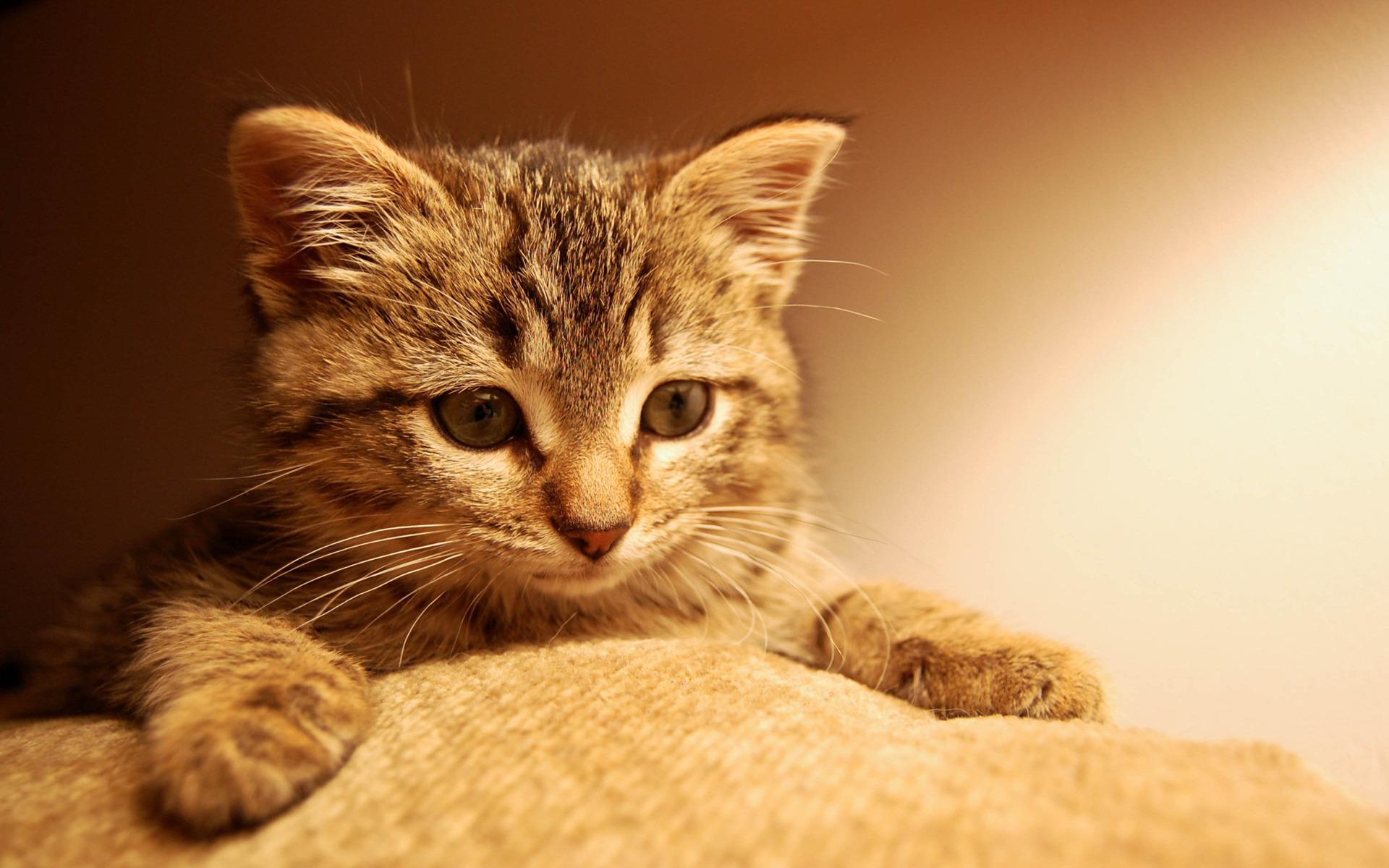 Удивленные котенки  № 1097816 без смс