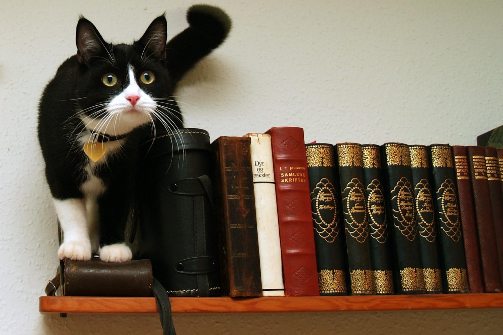 Котенок с книгой скачать