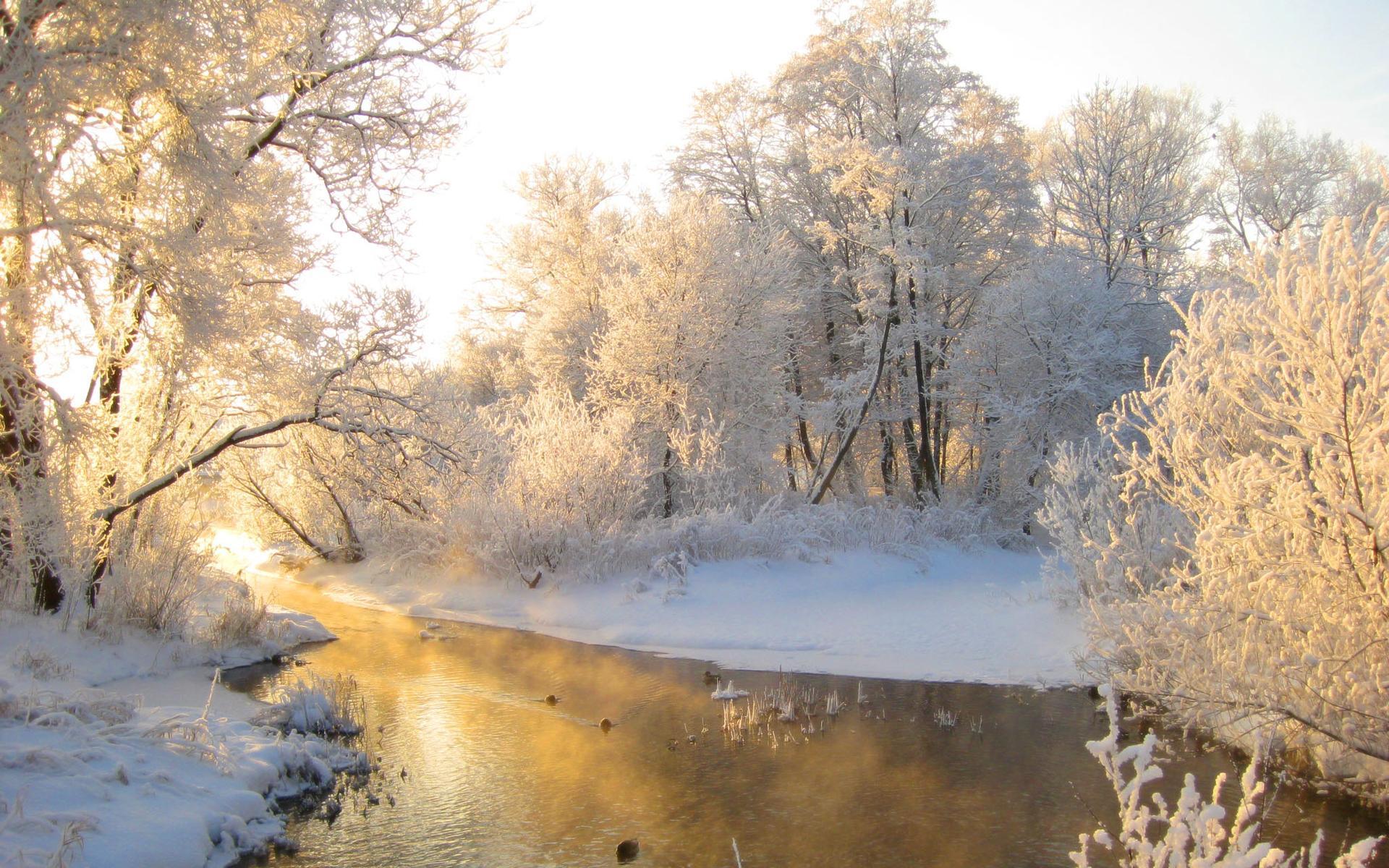 природа зима деревья бесплатно