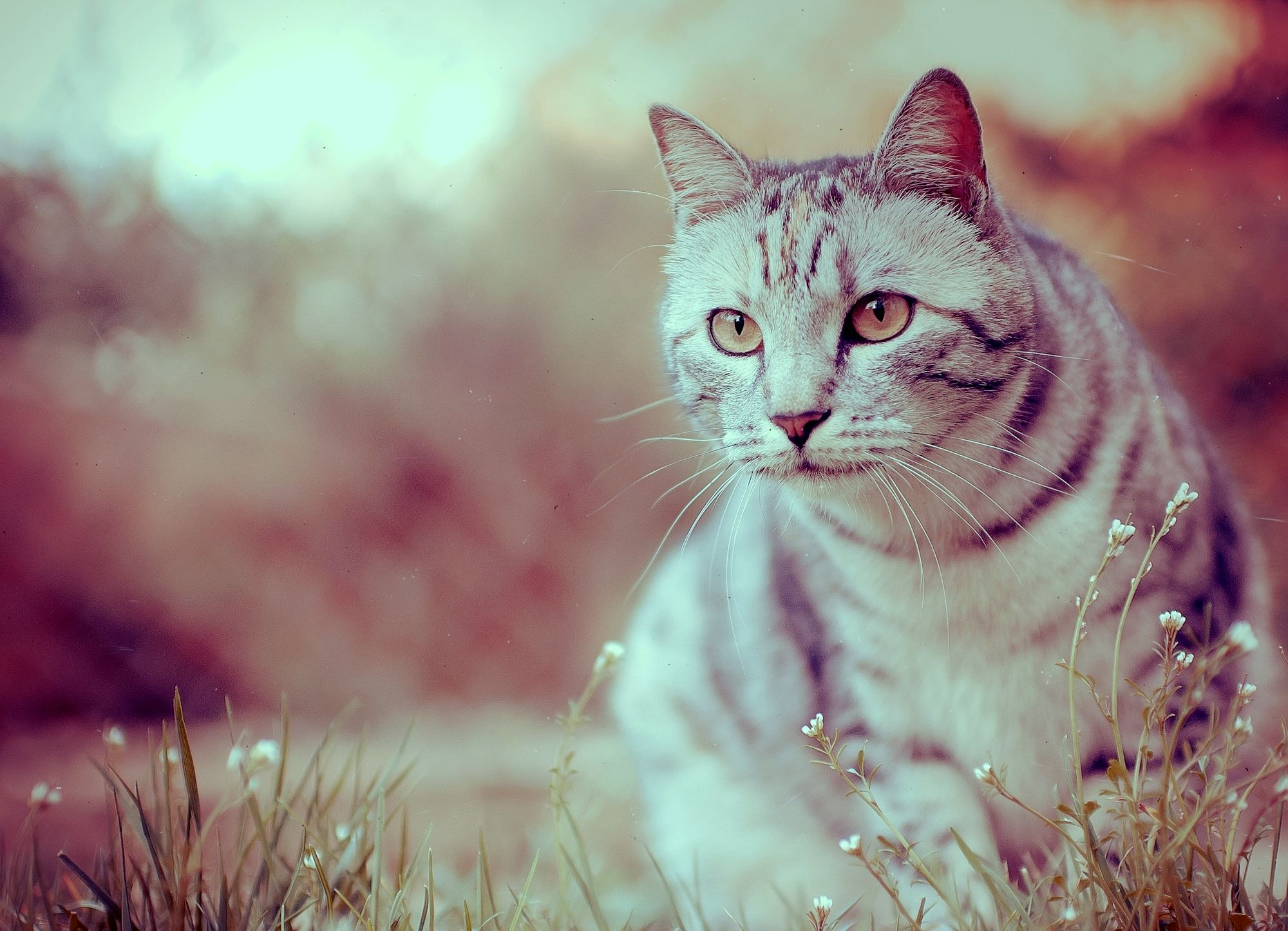 милый котенок мордочка камень трава бесплатно