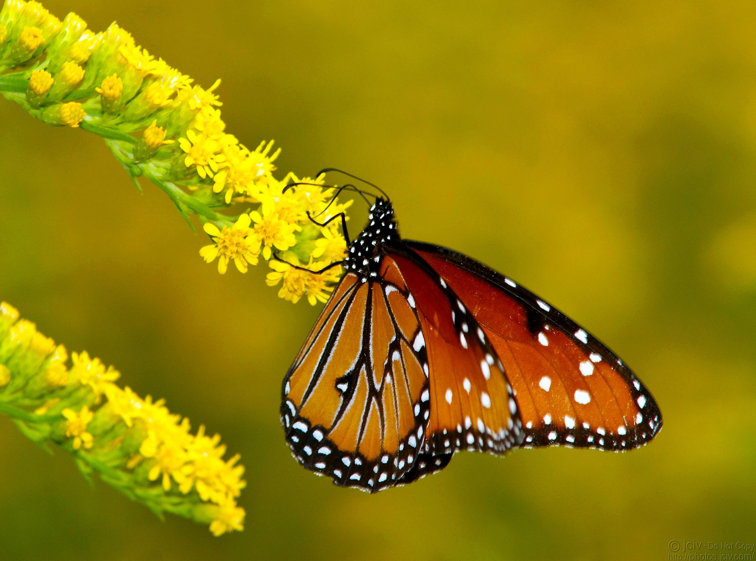 бабочка папоротник  № 3138421 загрузить
