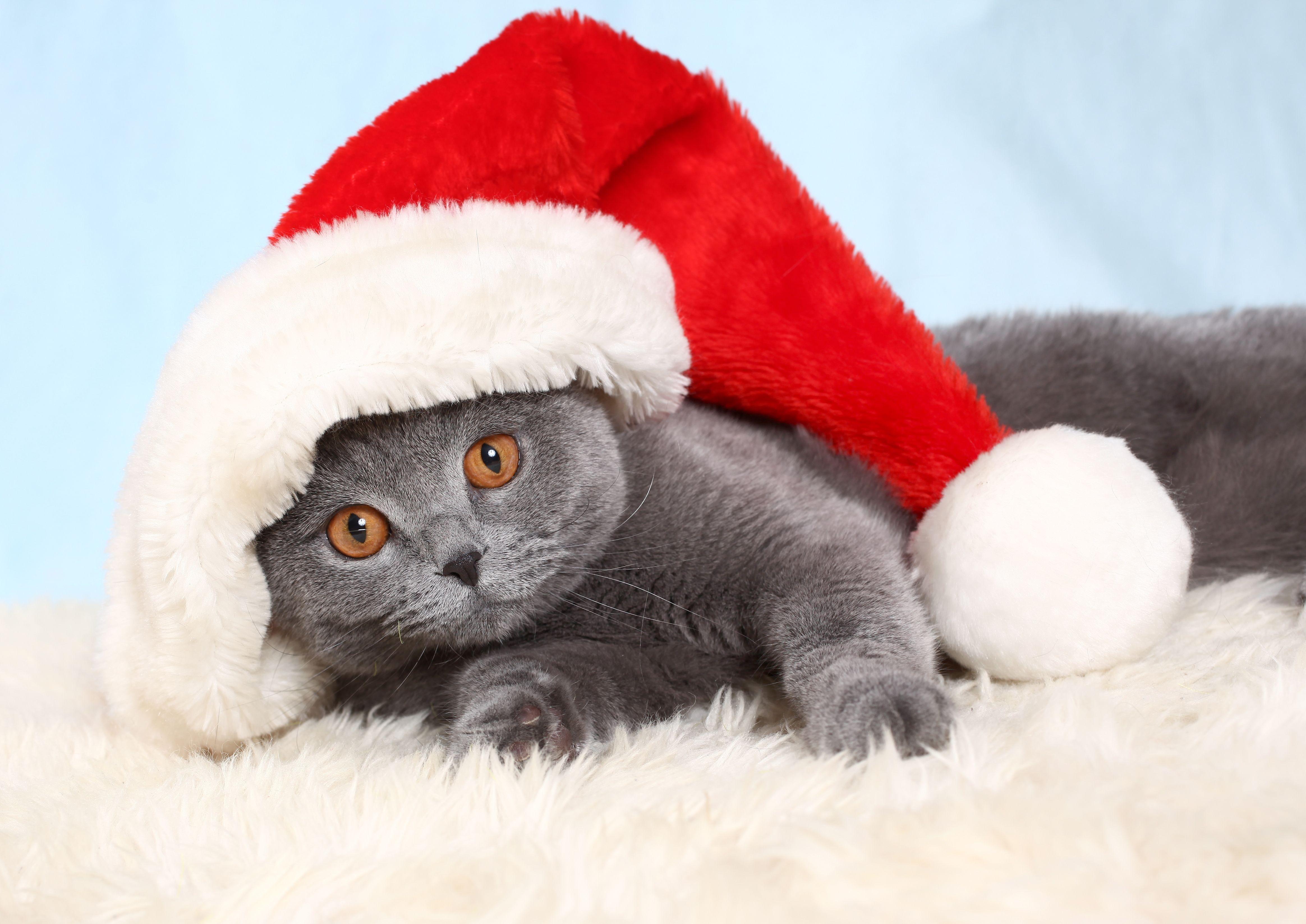 кот шапочка праздник без смс
