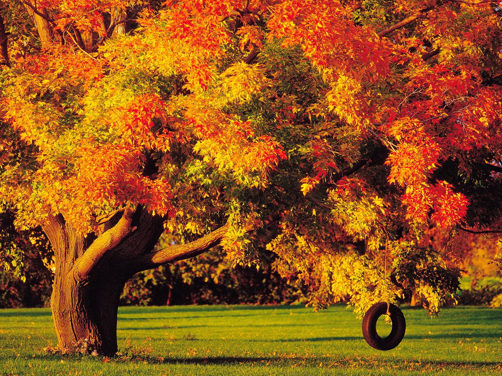 осеннее дерево бесплатно