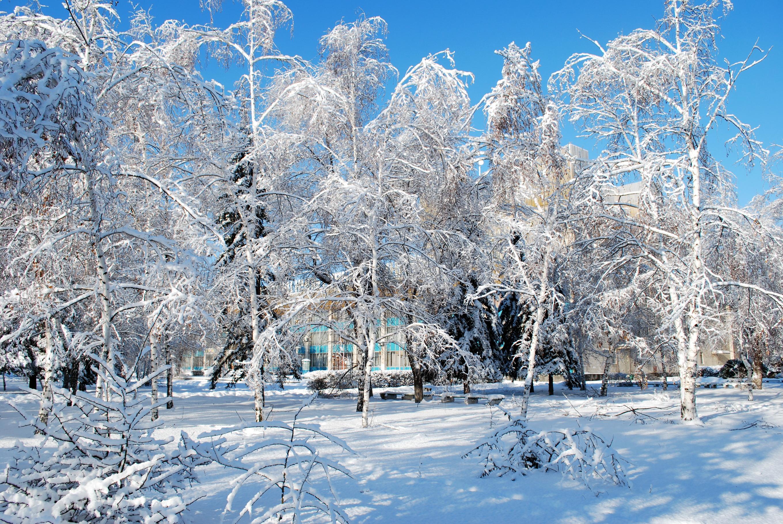 Фото природа зима весна 3