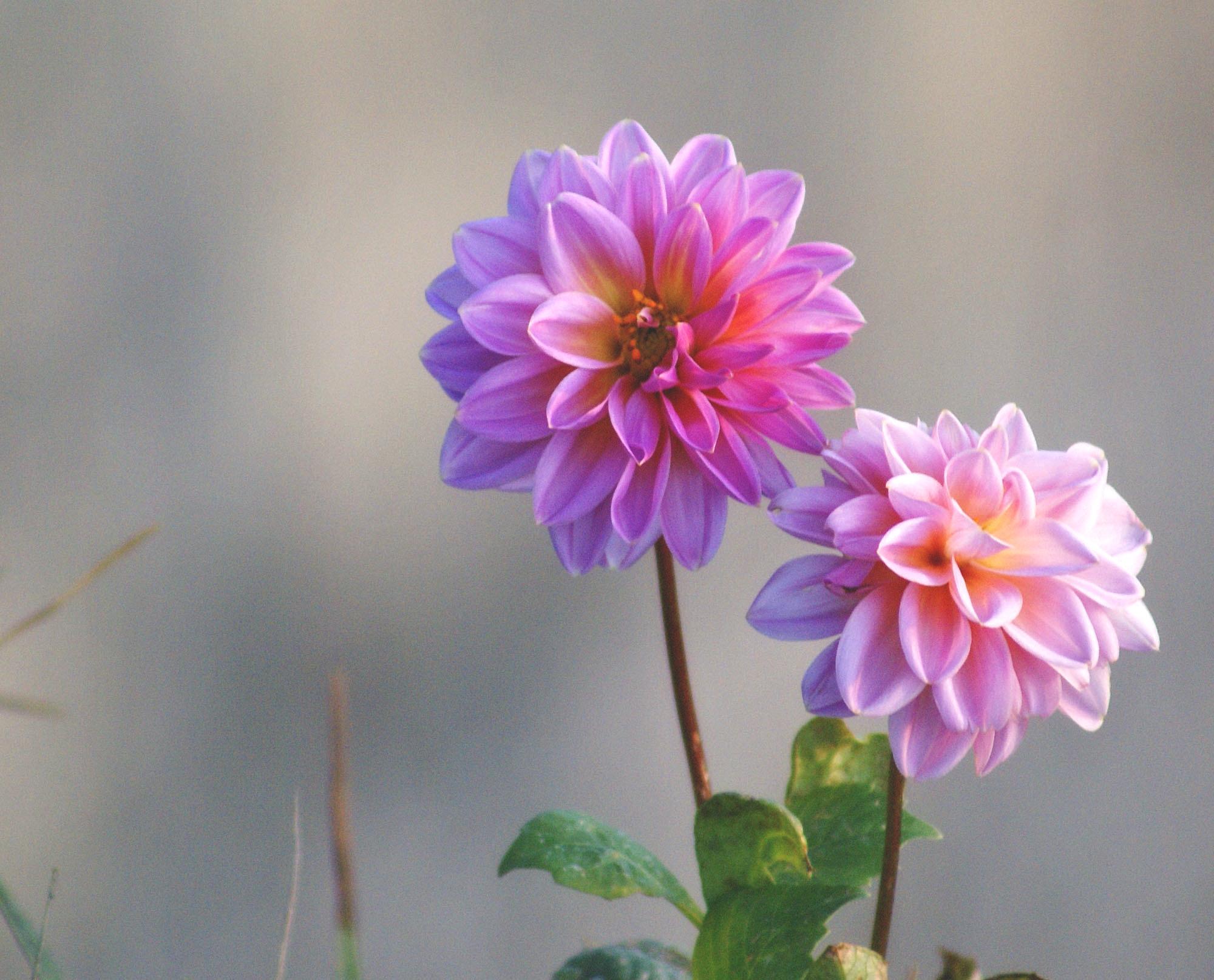 цветы фото красиво: