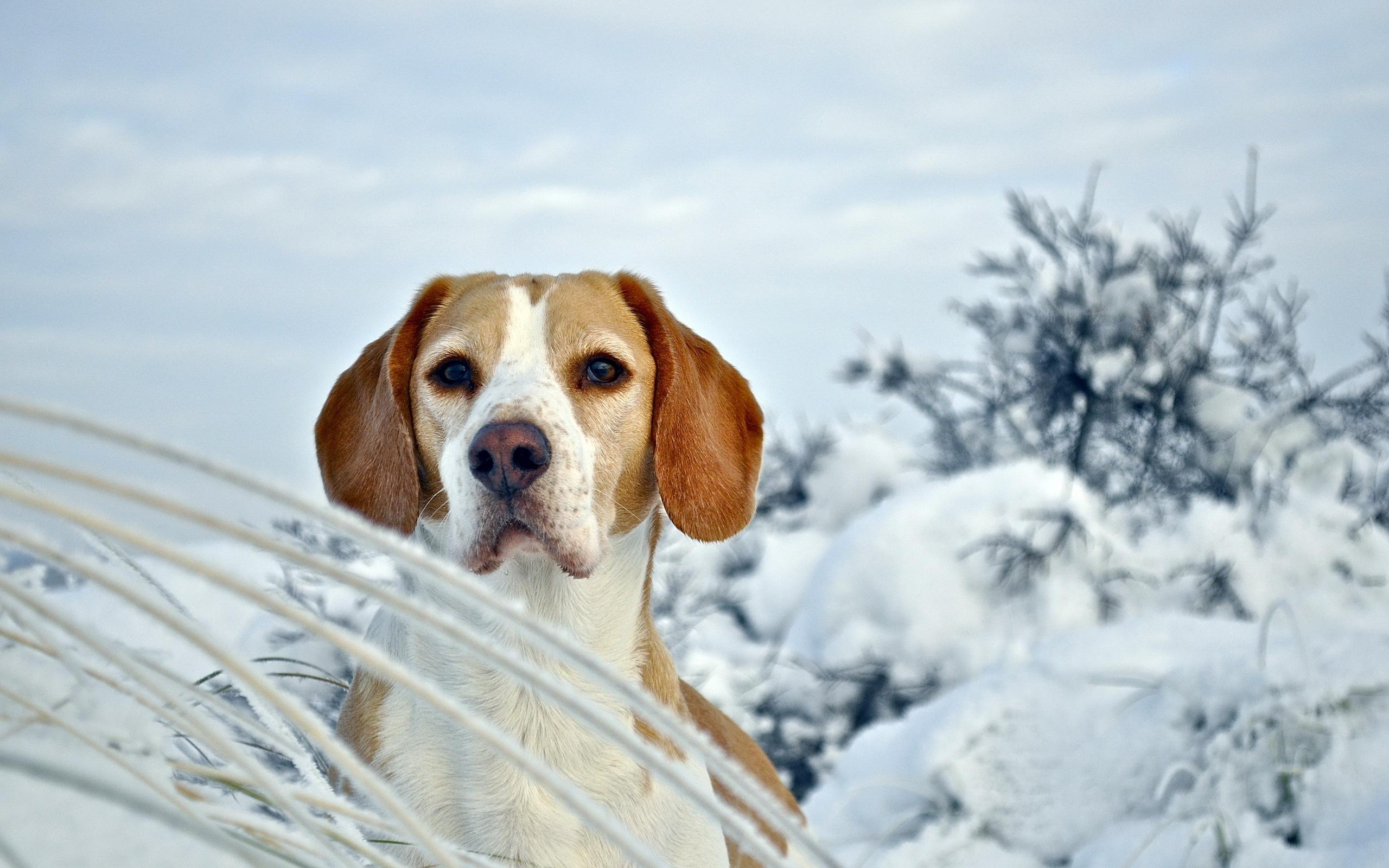 щенок снег puppy snow  № 2001714 загрузить