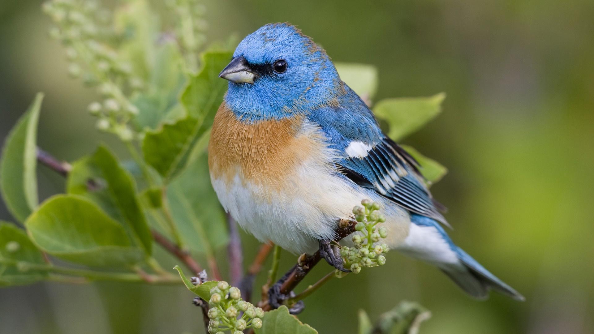 интересные птички загрузить