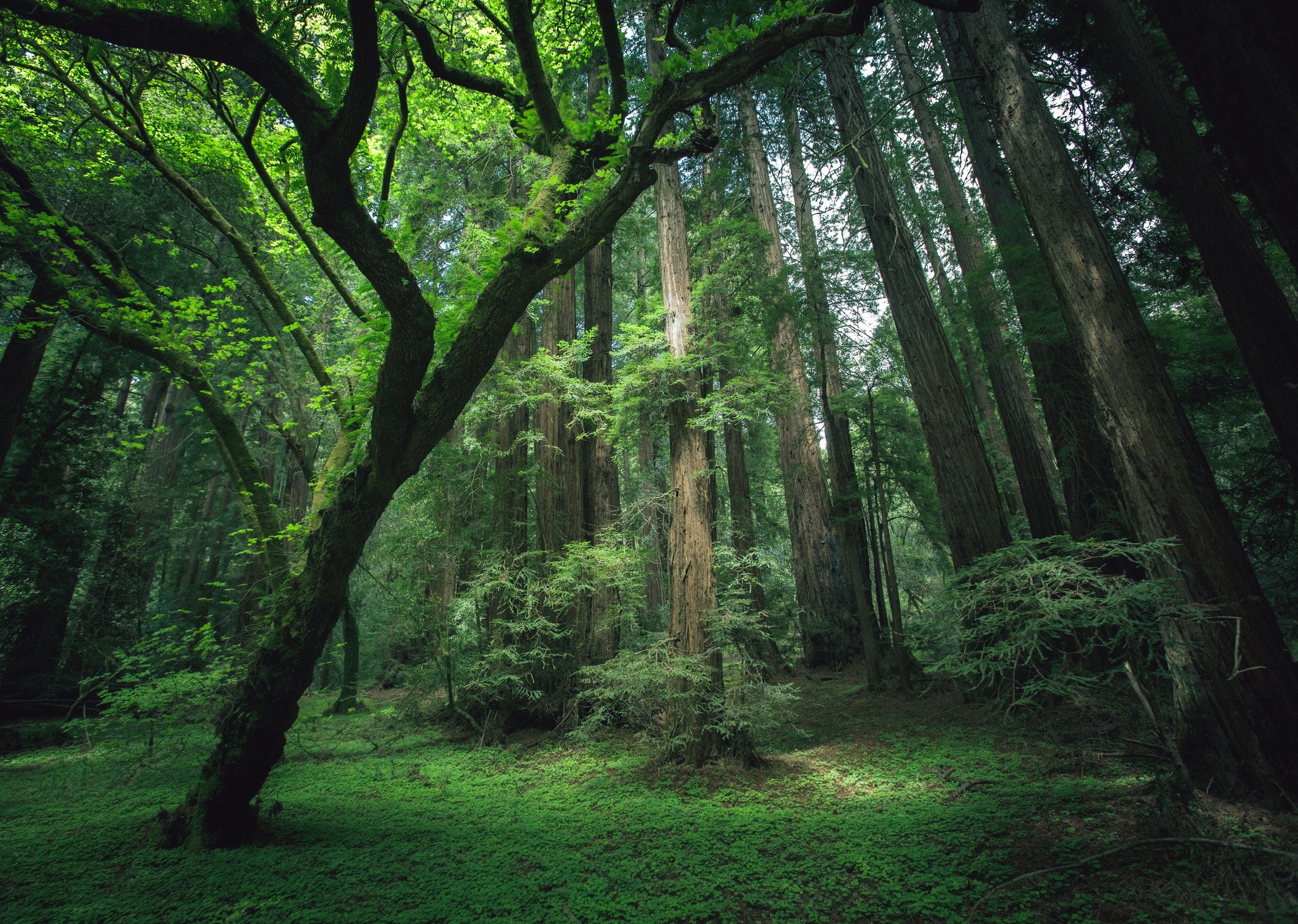 в чаще леса бесплатно