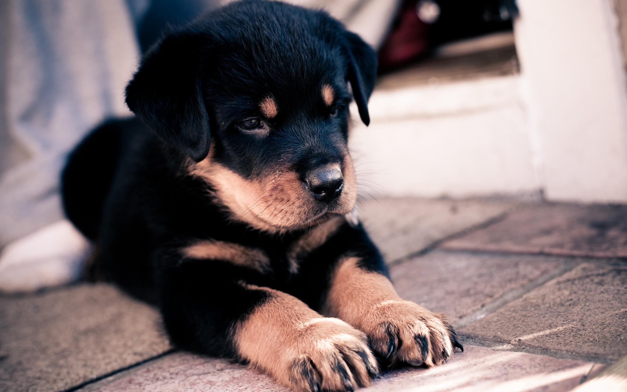 собака плитка свет  № 3646468  скачать