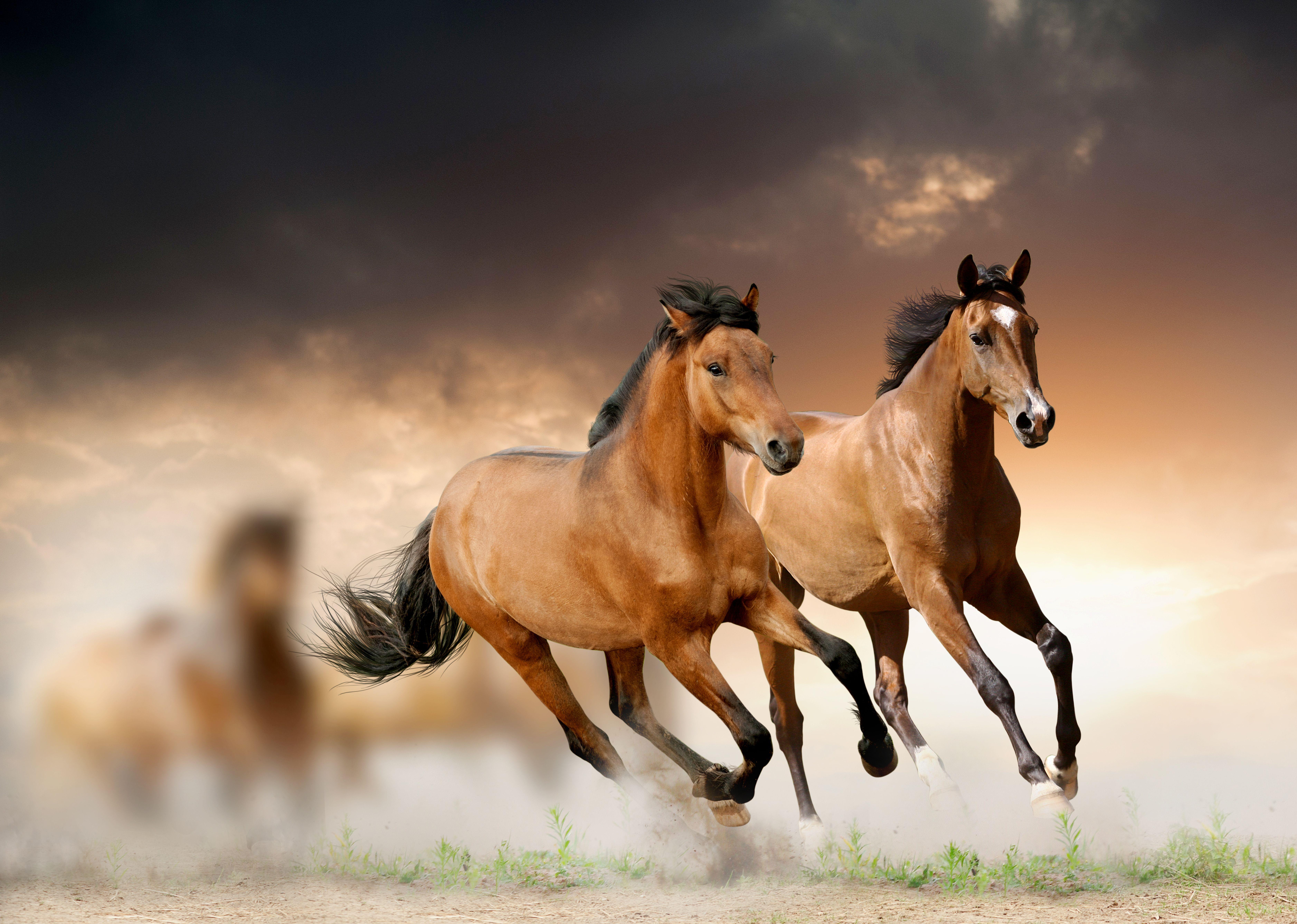 Звуки лошадей скачать бесплатно