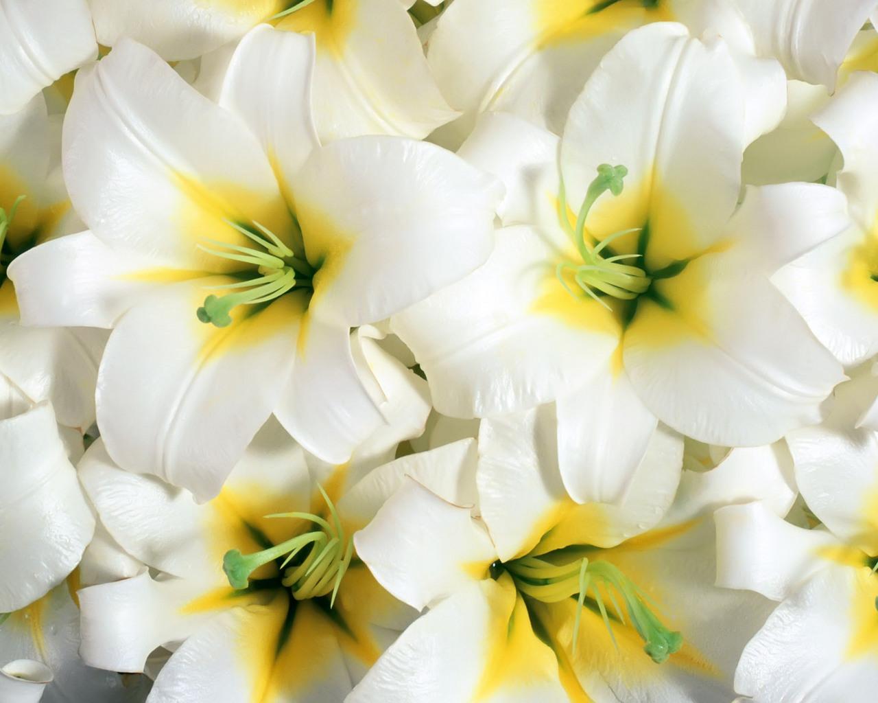 фото цветы лилии