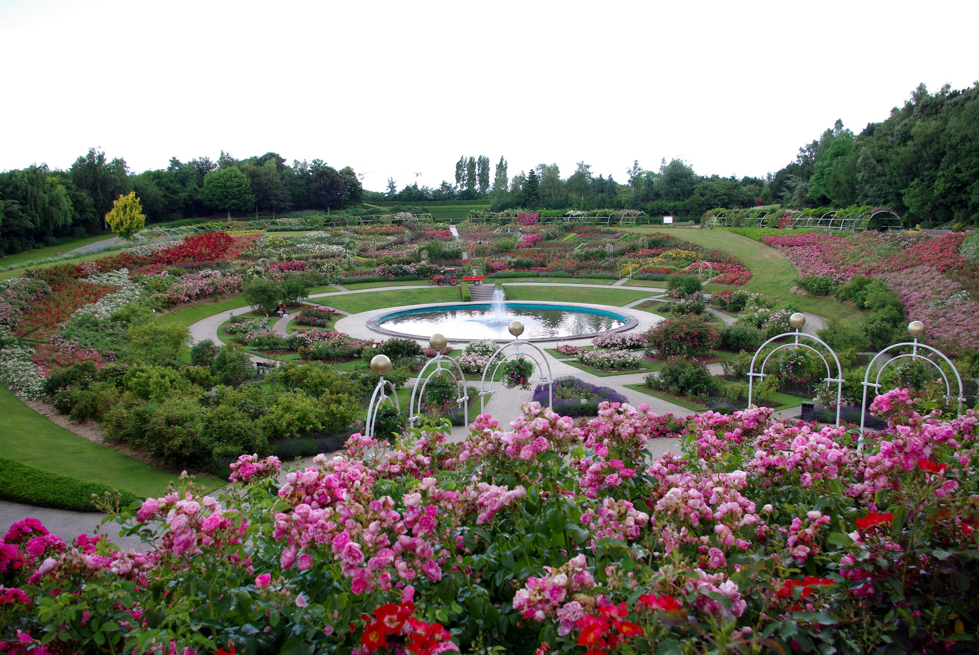 Фото сад любви и цветов