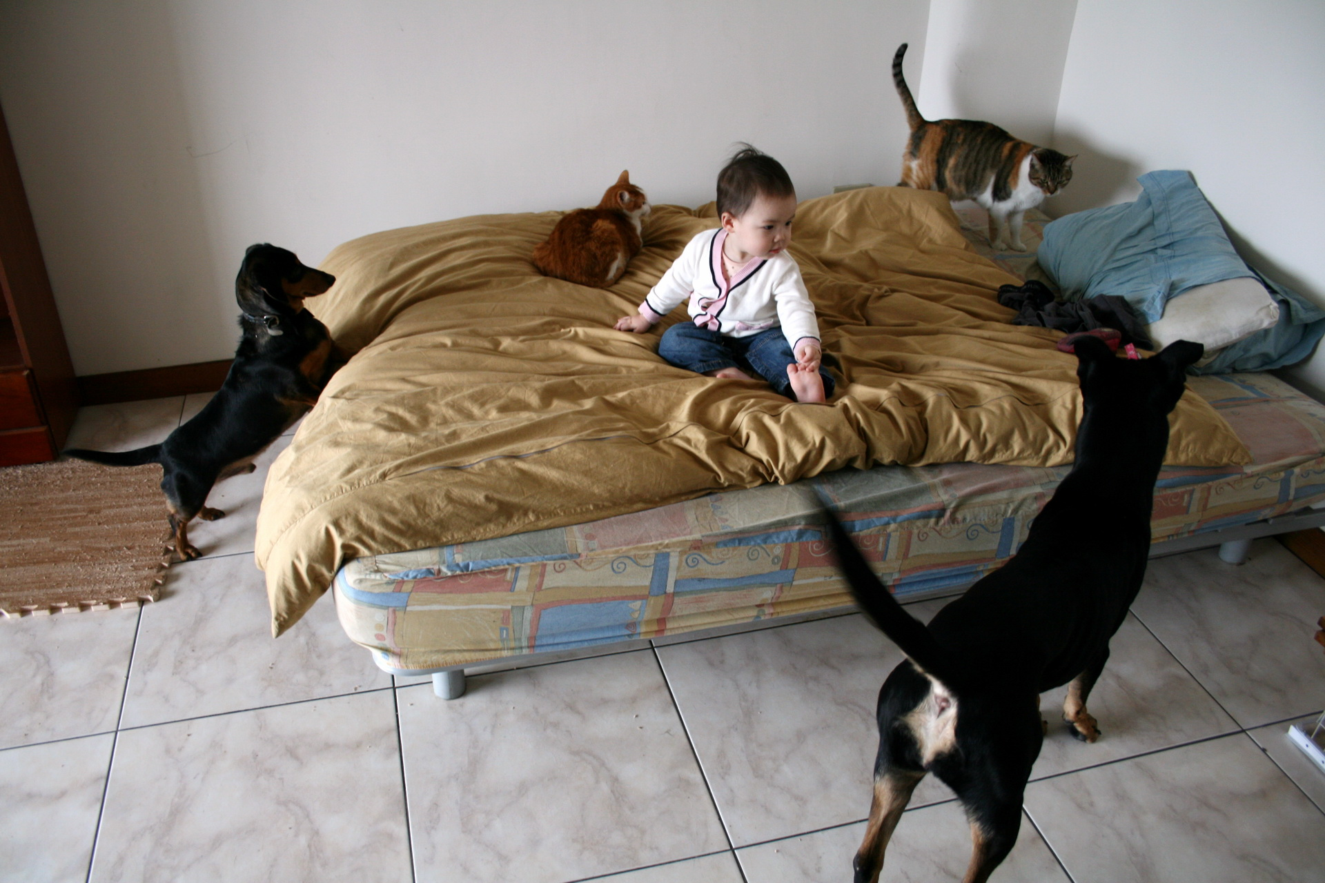 собака кровать  № 2010257 бесплатно