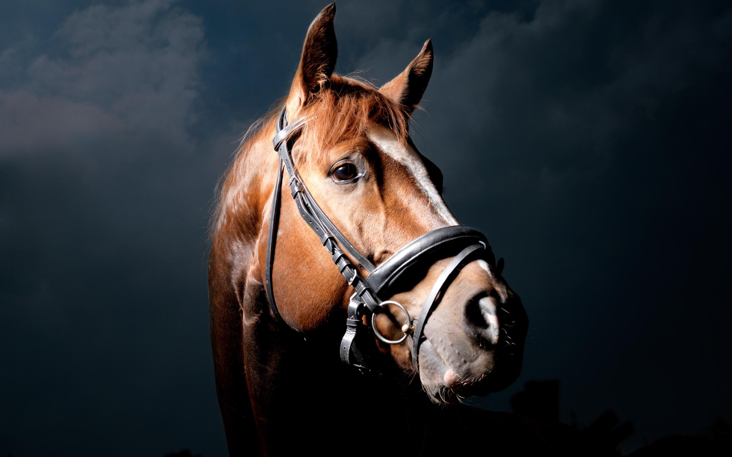 Черная лошадь без смс